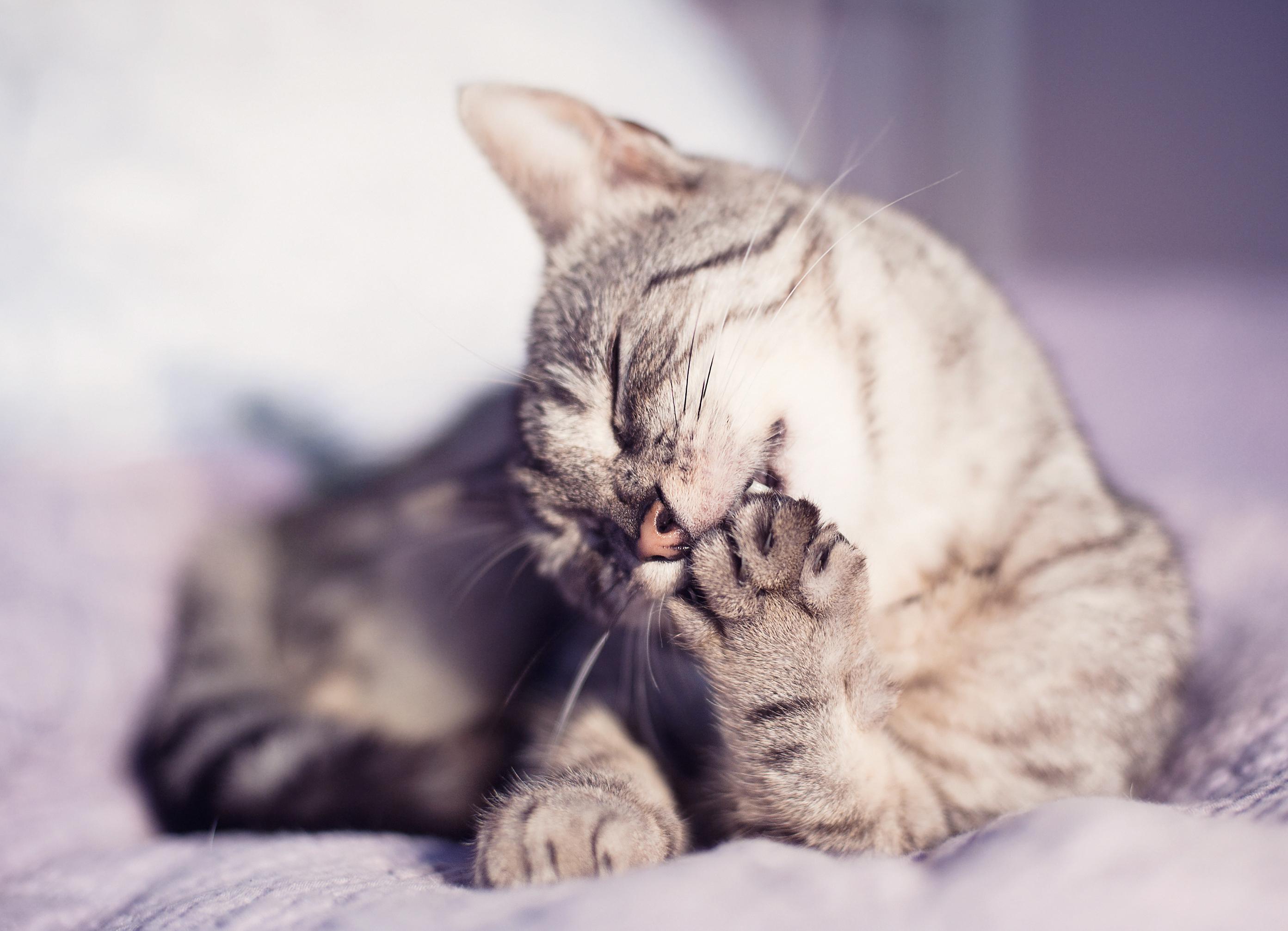 Кот с зеркалом  № 1689802 без смс