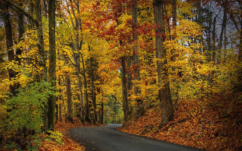 природа деревья листья осень nature trees leaves autumn  № 1036896 загрузить