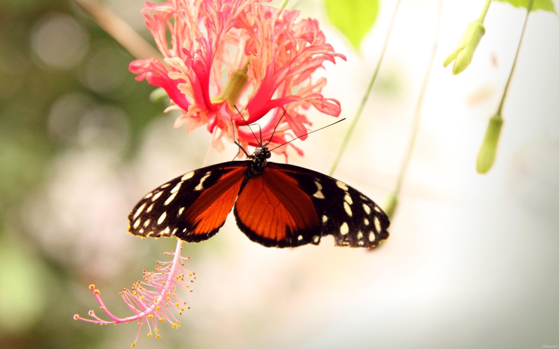 Разные бабочки  № 2033774  скачать