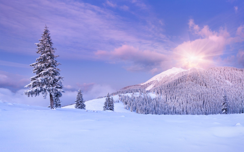 природа снег зима деревья горы  № 2577095 без смс