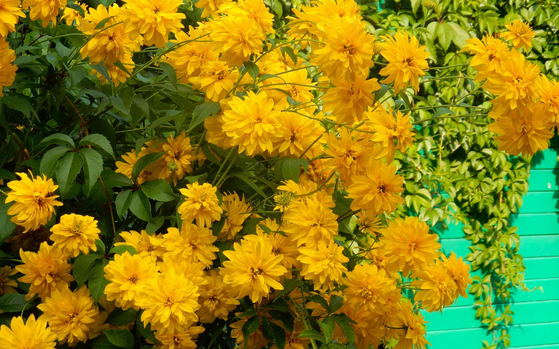 употреблением следует картинки цветы золотые шары на рабочий стол статье найдете