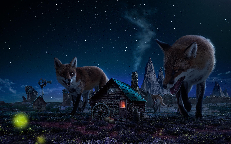 Очень красивые картинки с животными ночью, днем