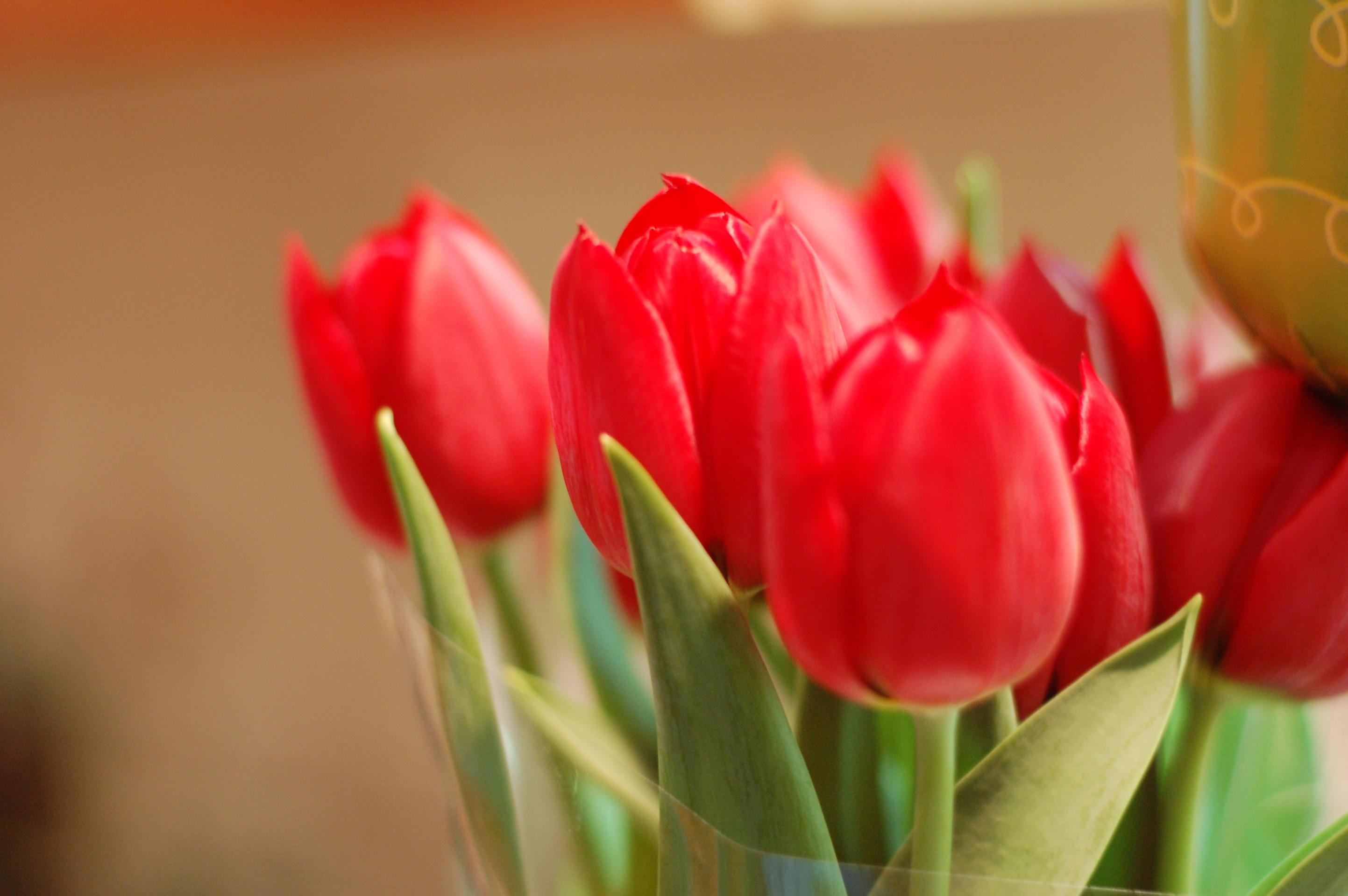 букет,тюльпаны,листья  № 415676 бесплатно