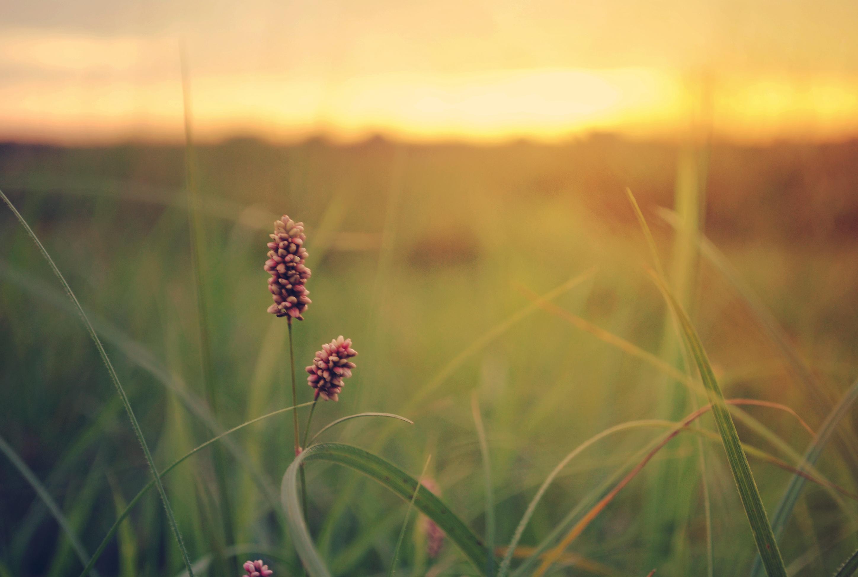 закат небо полевые растения  № 963465  скачать