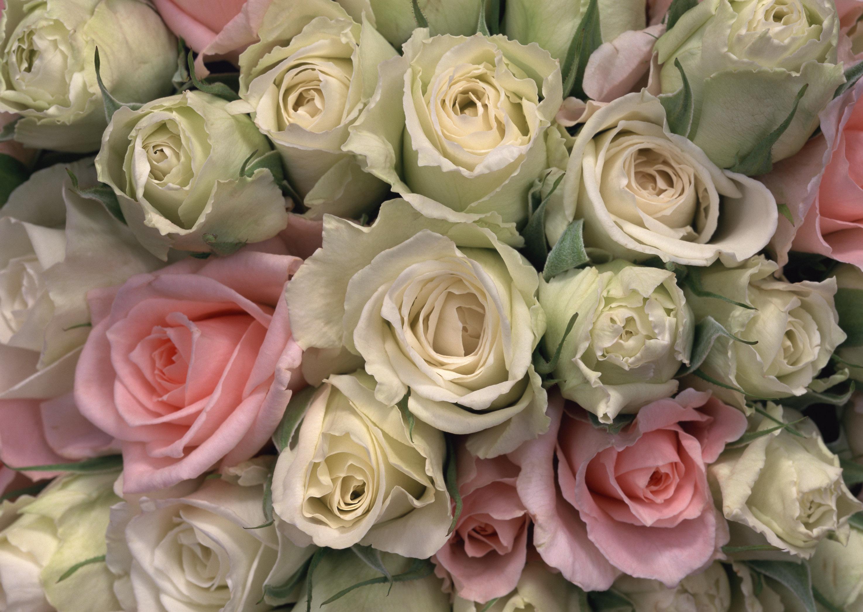 фото шикарных букетов цветов высокого разрешения красавец получил известность