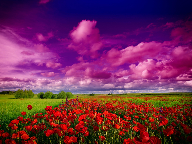 что картинки красивая природа цветы небо будет вечным