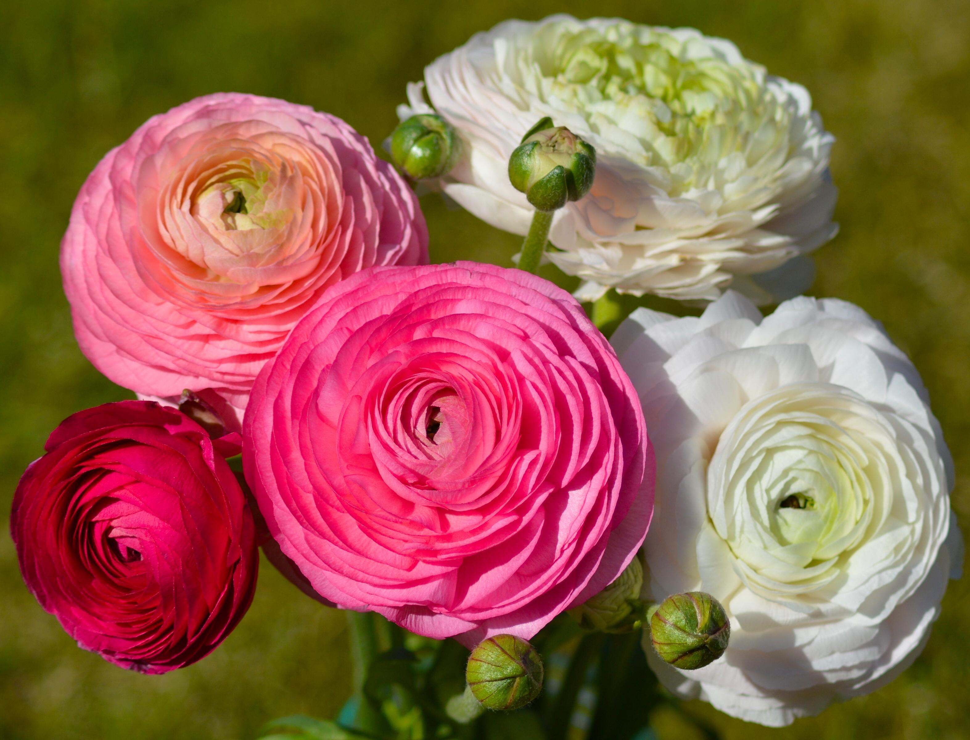 Красивые цветы для букета названия и фото, детей