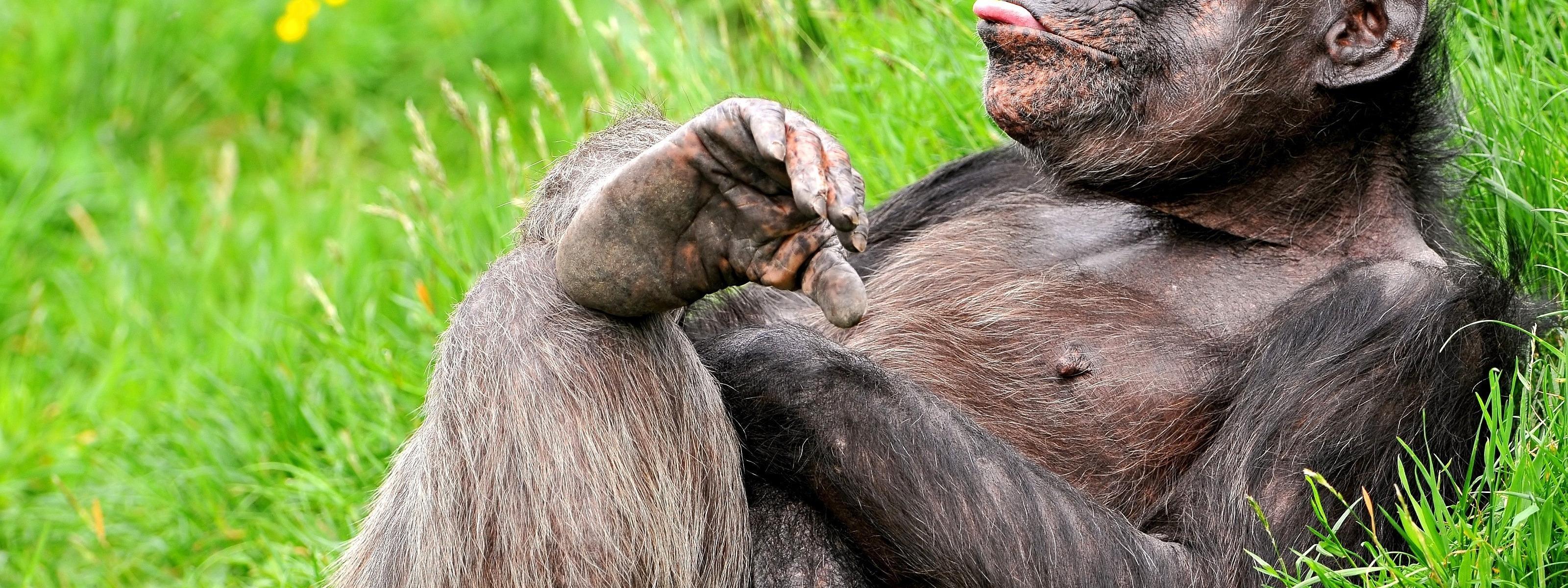 Смешные картинки про животных до слез обезьян