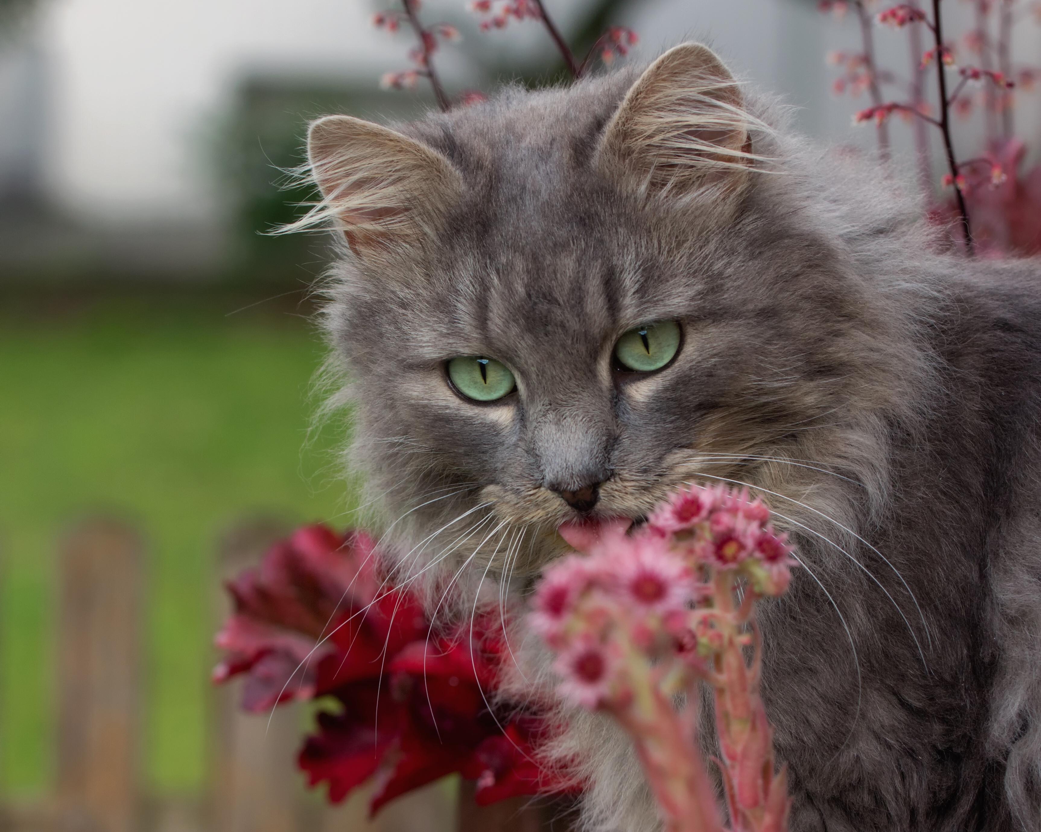 берлину коты в цветах на рабочий стол птицам