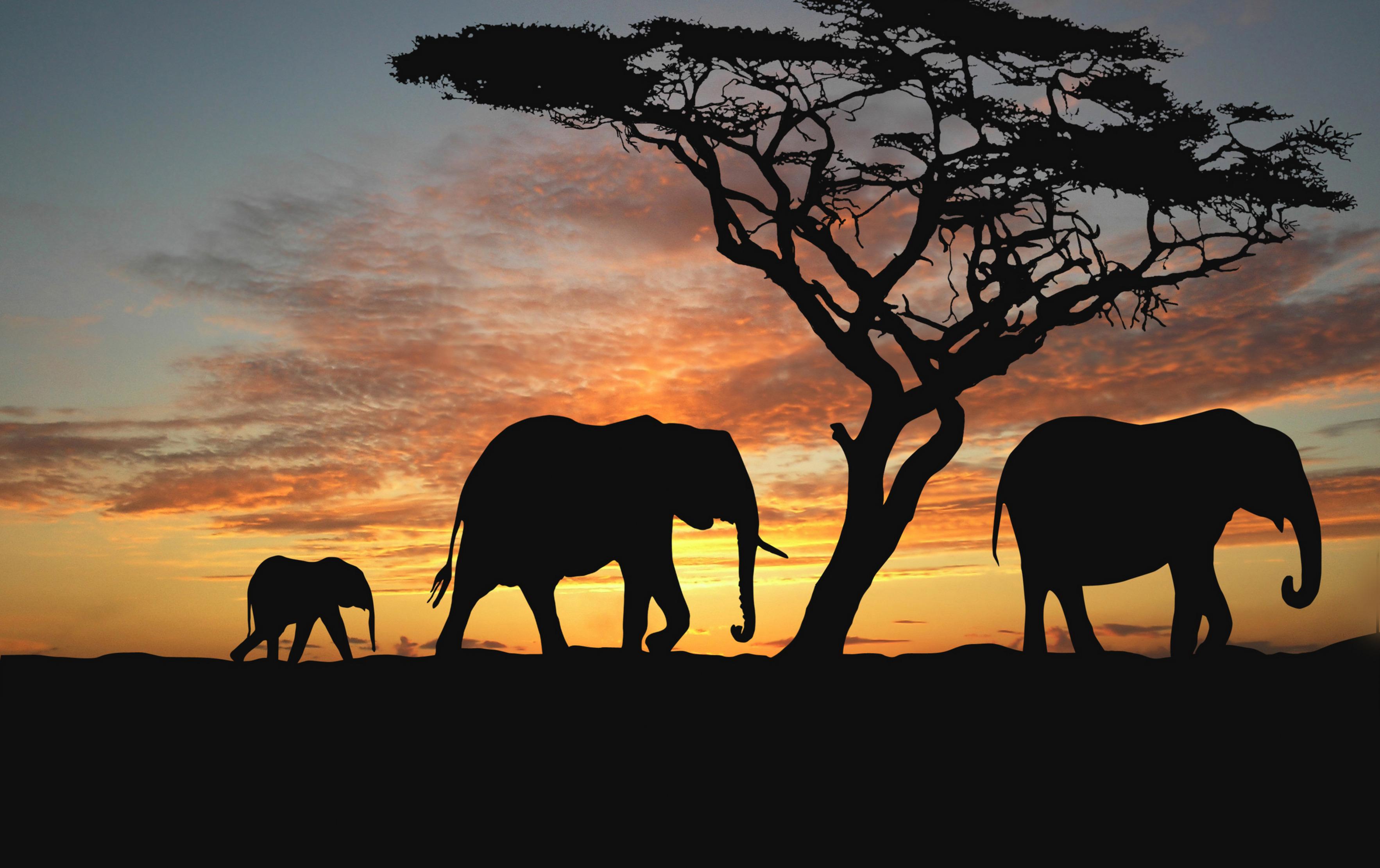 Фотообои закат в африке