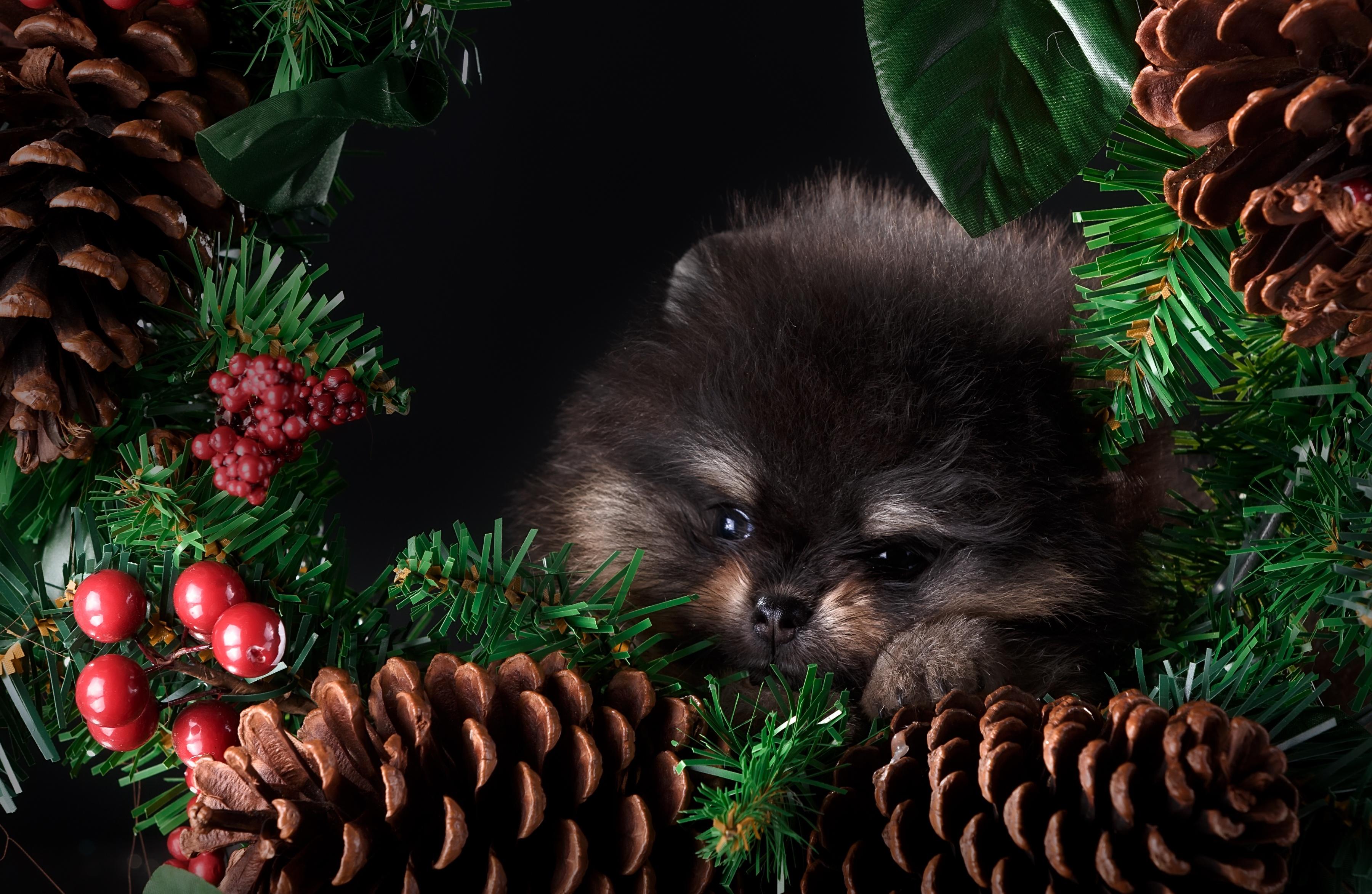 Открытки новогодние елки и шпицы