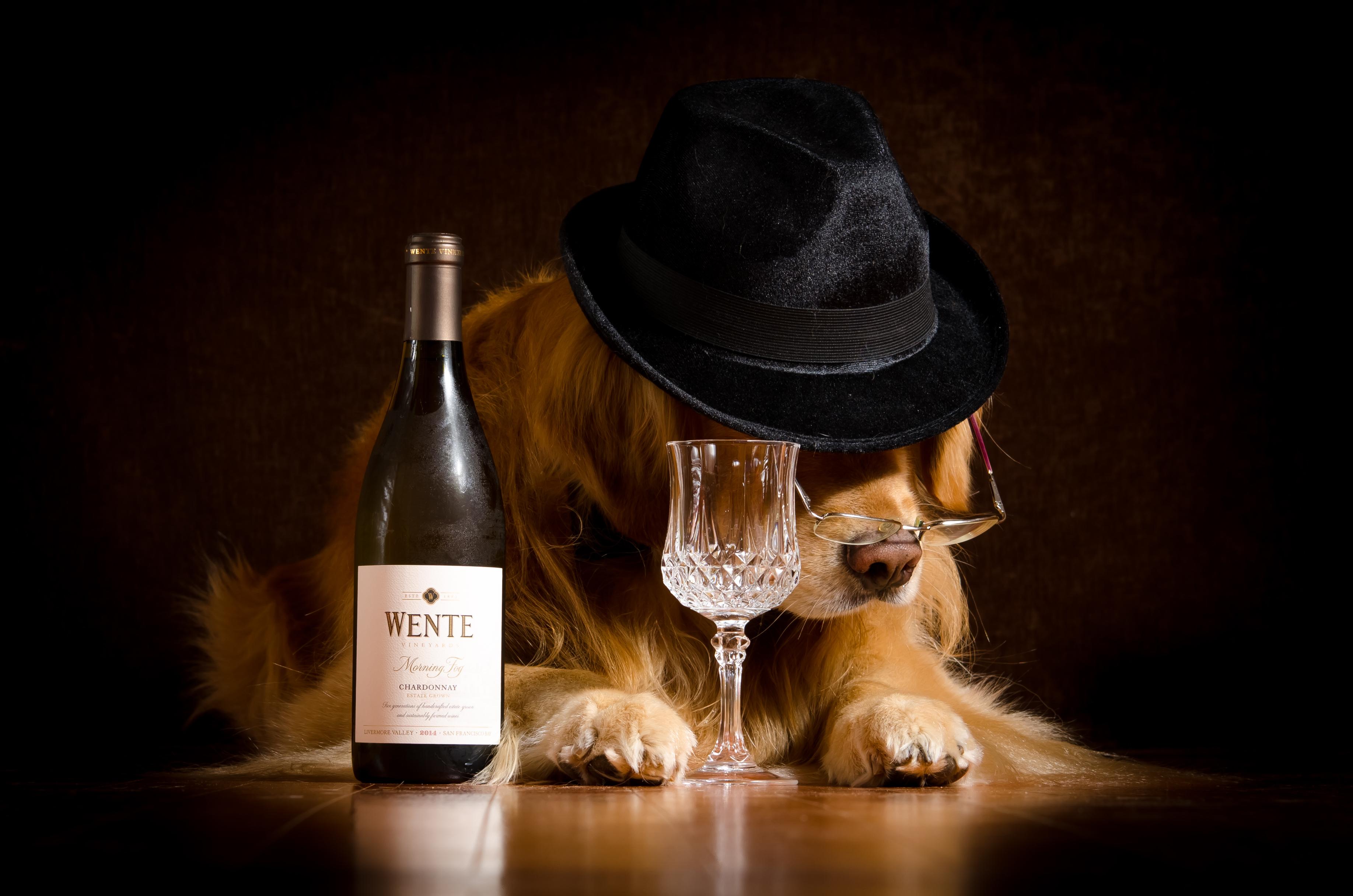 Смешную картинку с бокалом вина