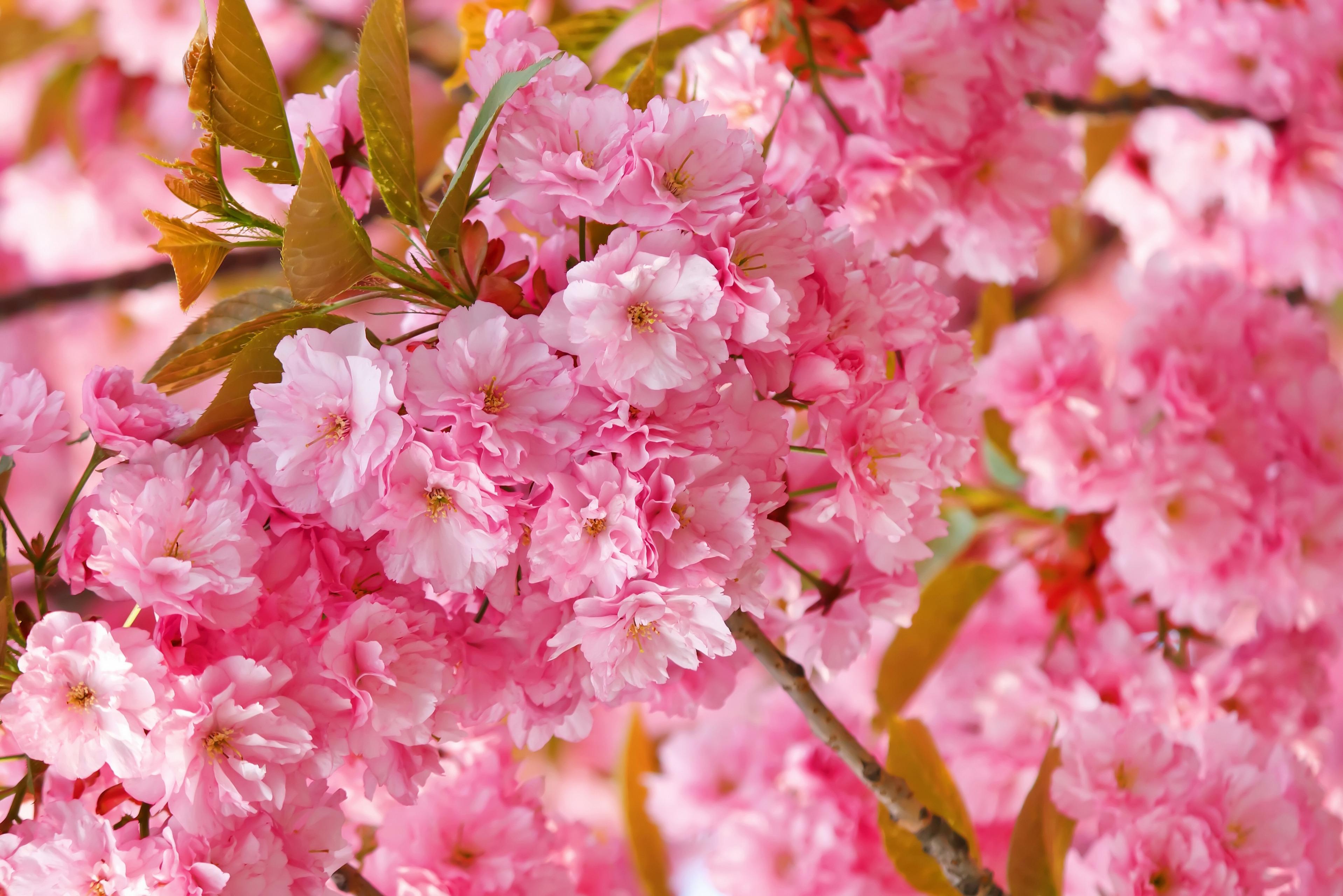 spring wallpaper free - HD1920×1080