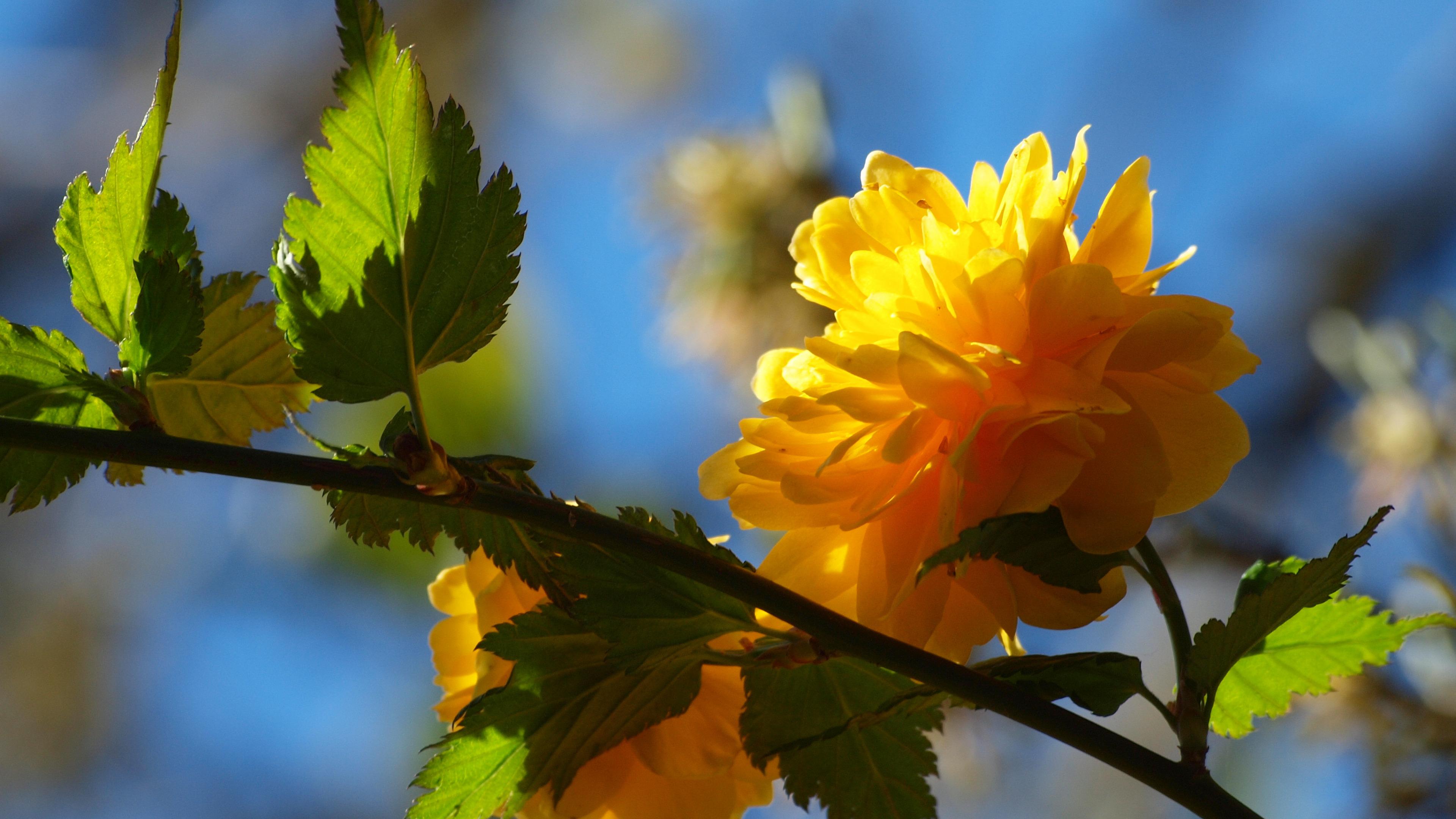 природа цветы листья  № 2053523 без смс