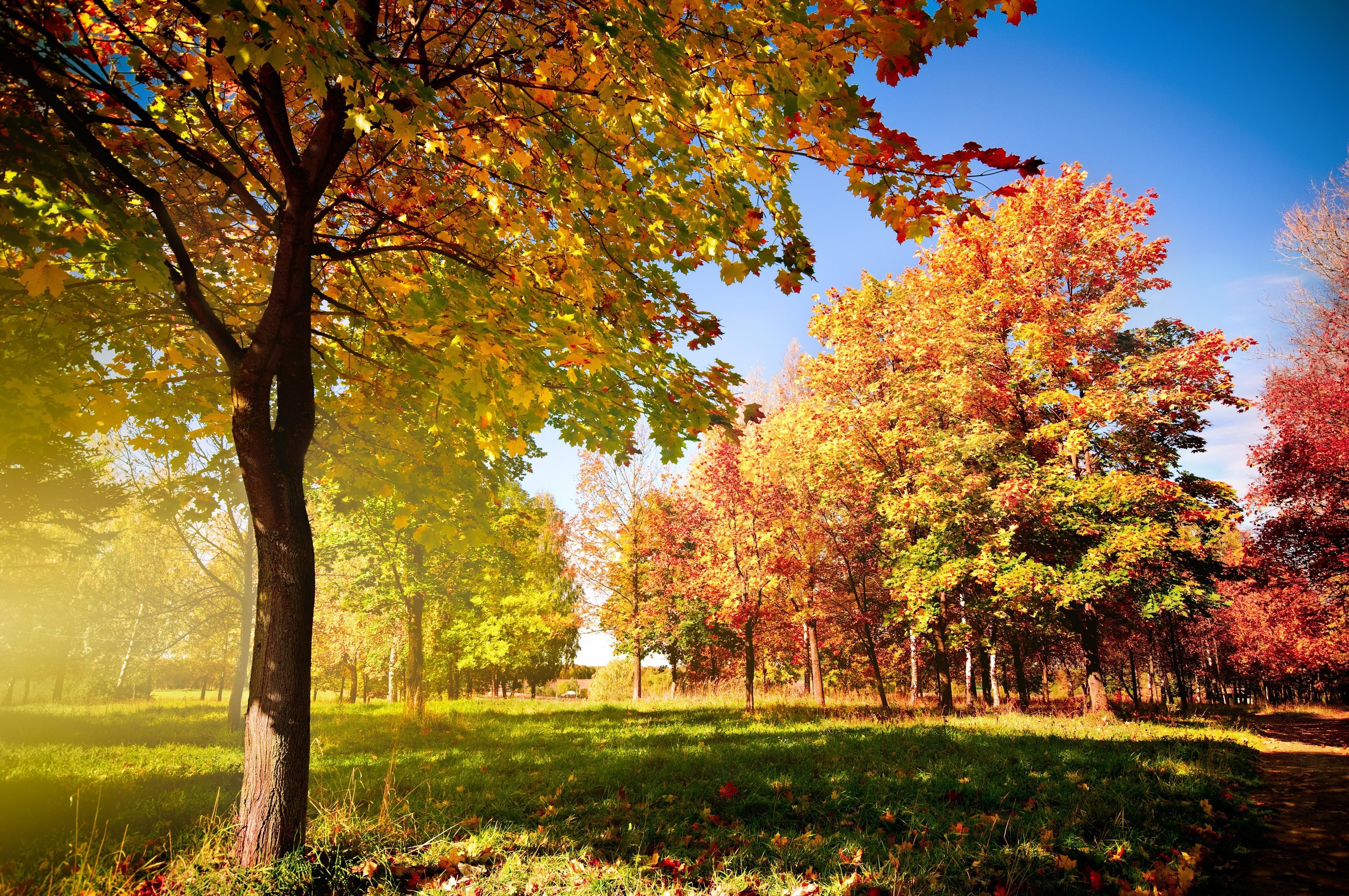 Осенний лиственный лес  № 3193545  скачать