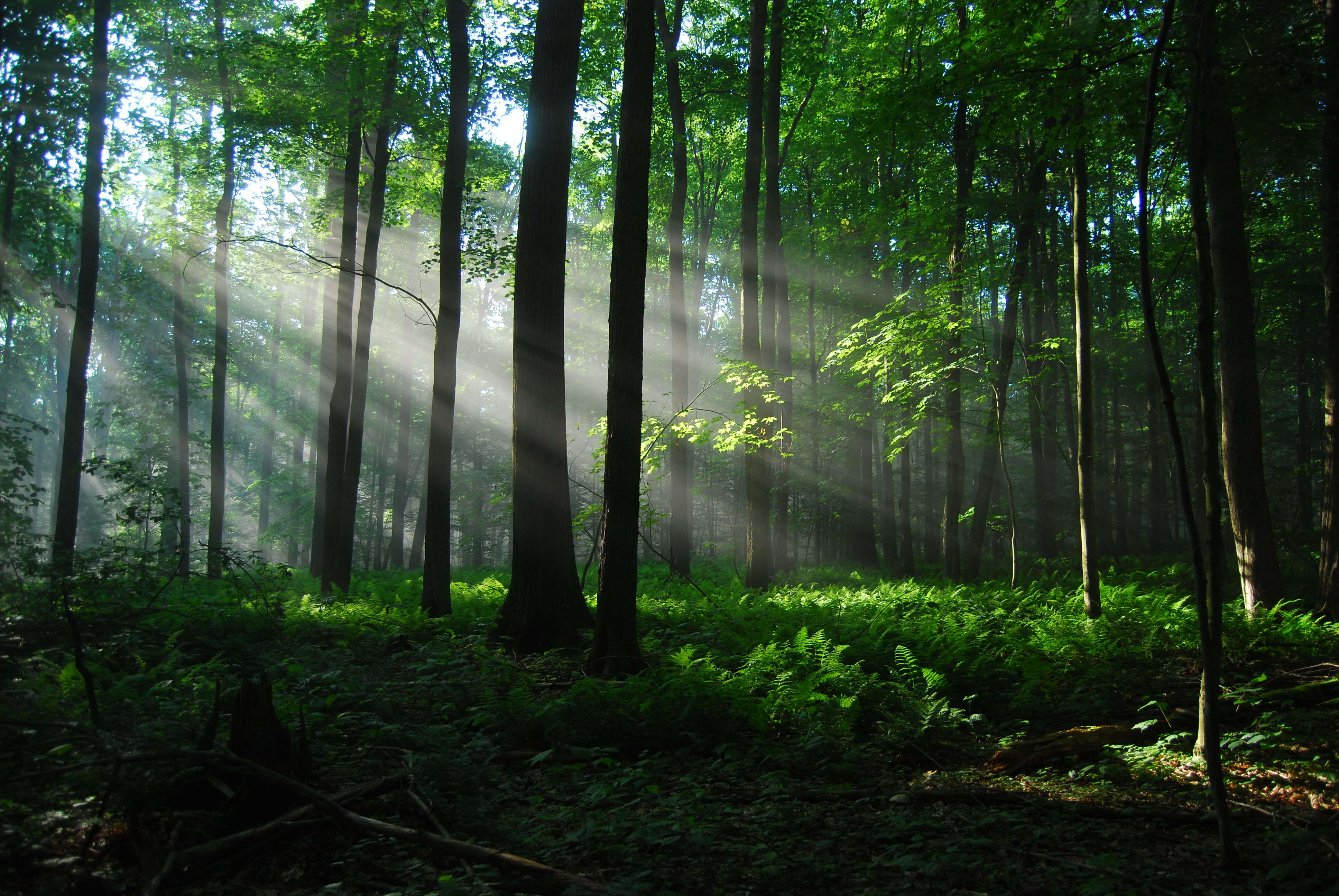 фото на фоне леса - 11
