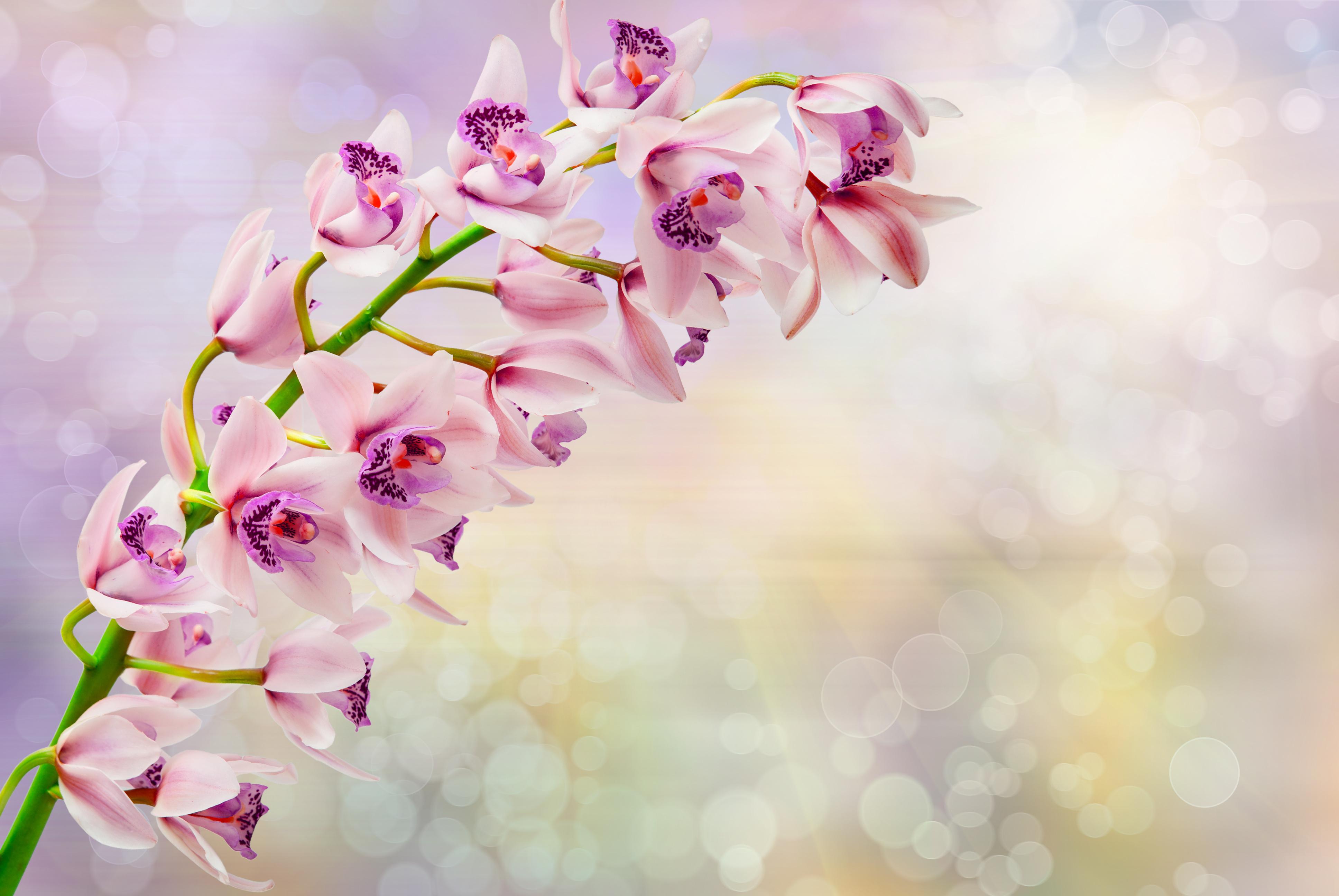 Красивый фон цветов для открытки, марта девочкам картинками