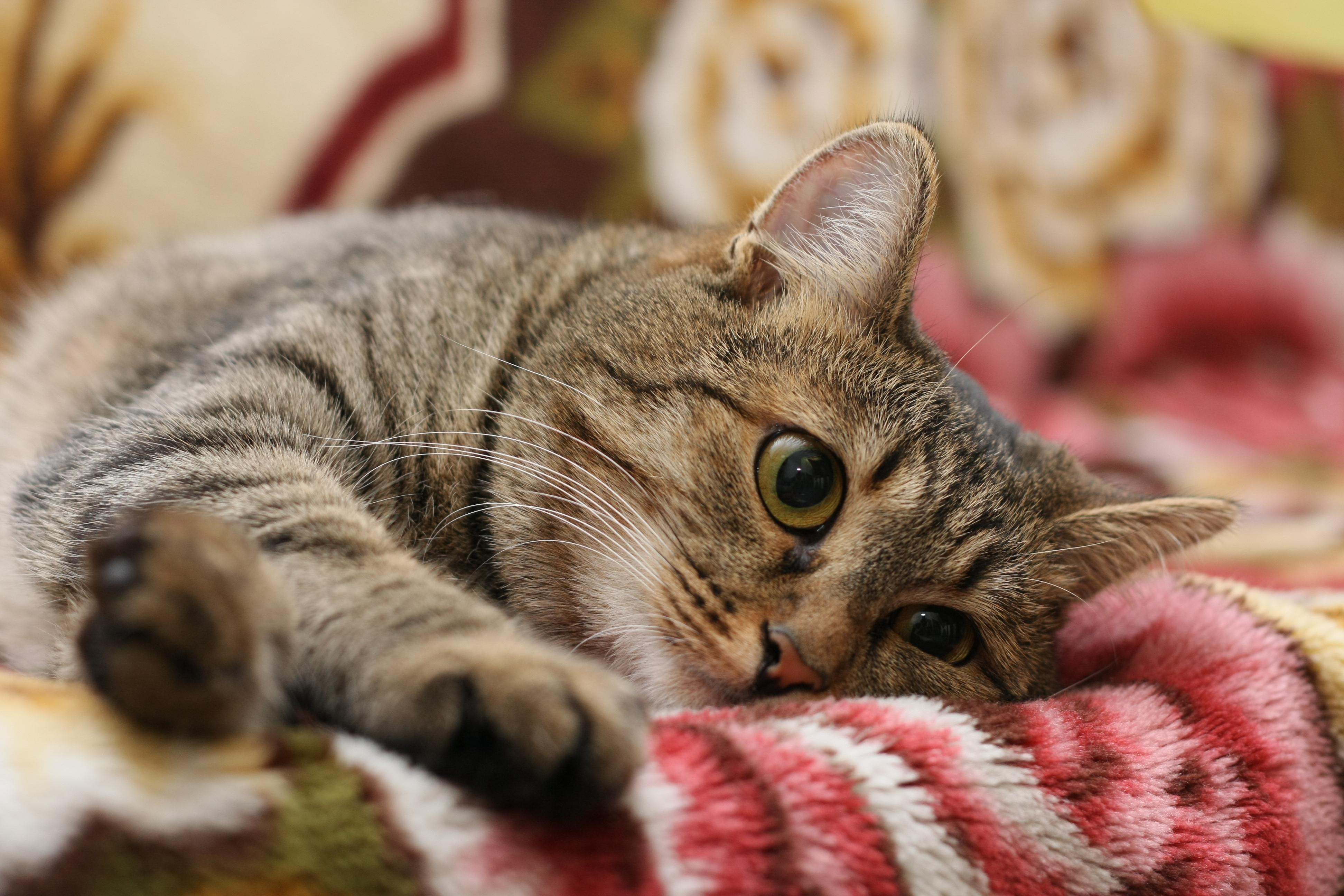 картинки котов большого разрешения боль