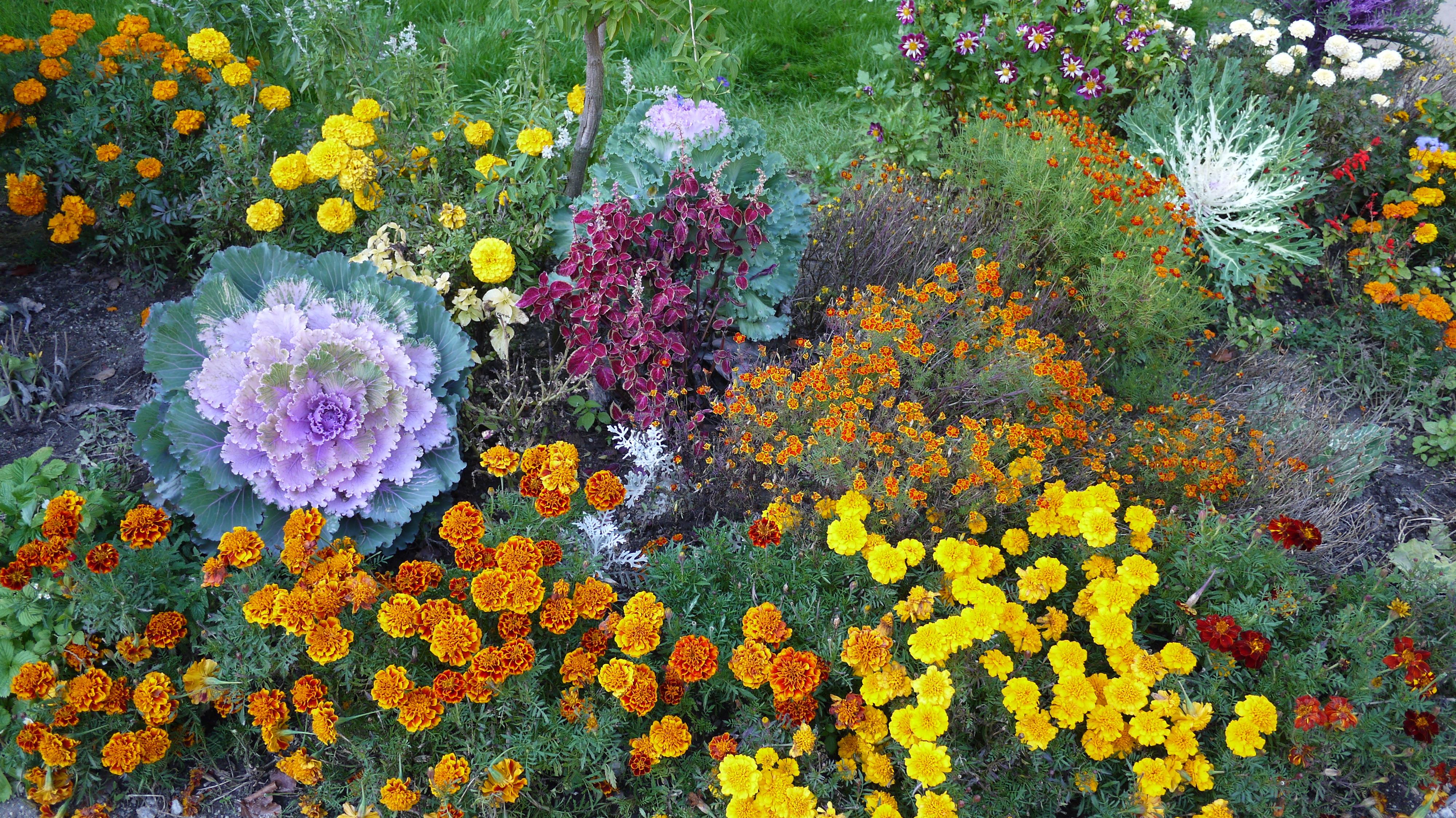 Фото осенних цветов кустами с названиями