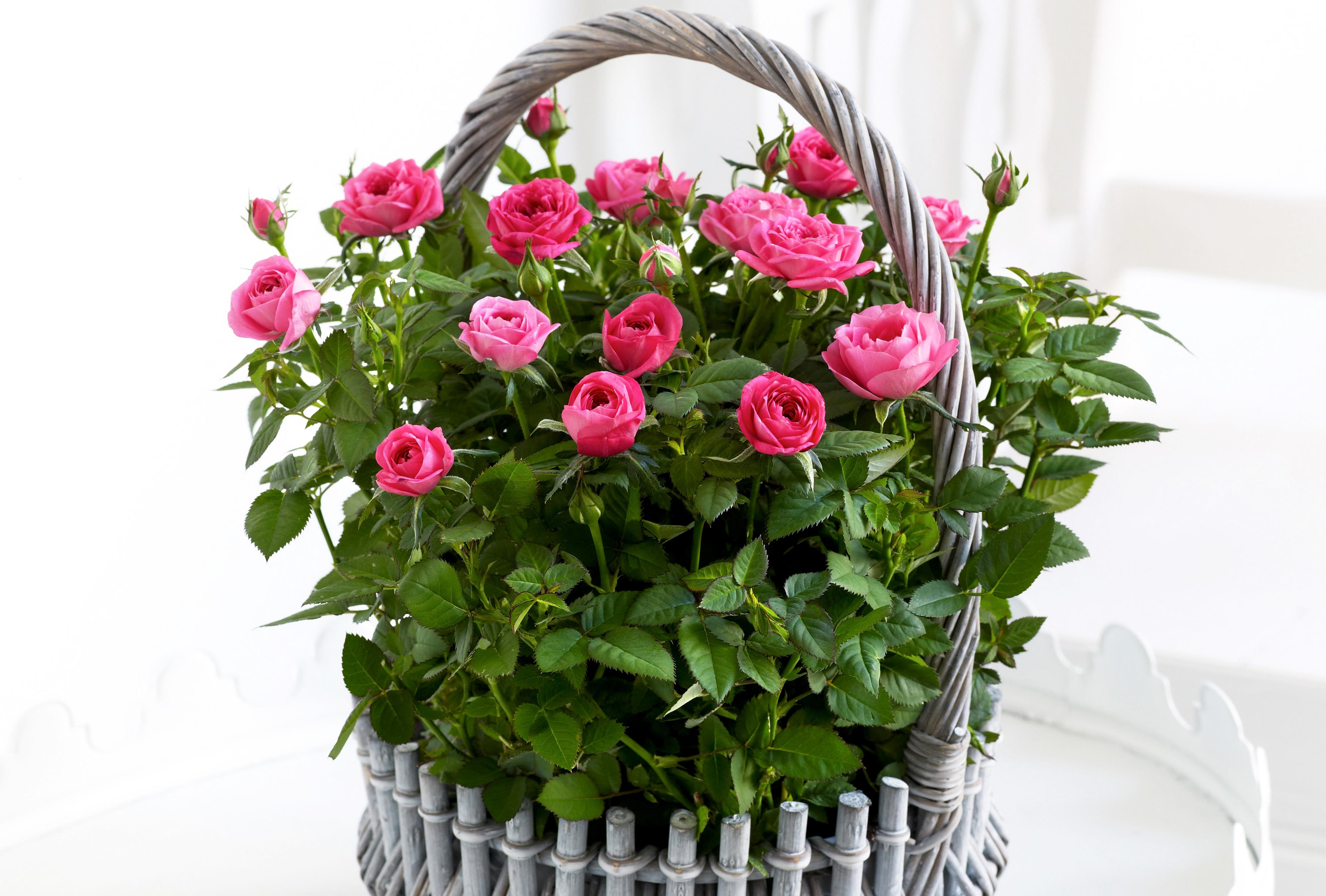 Фото цветов розы в корзине