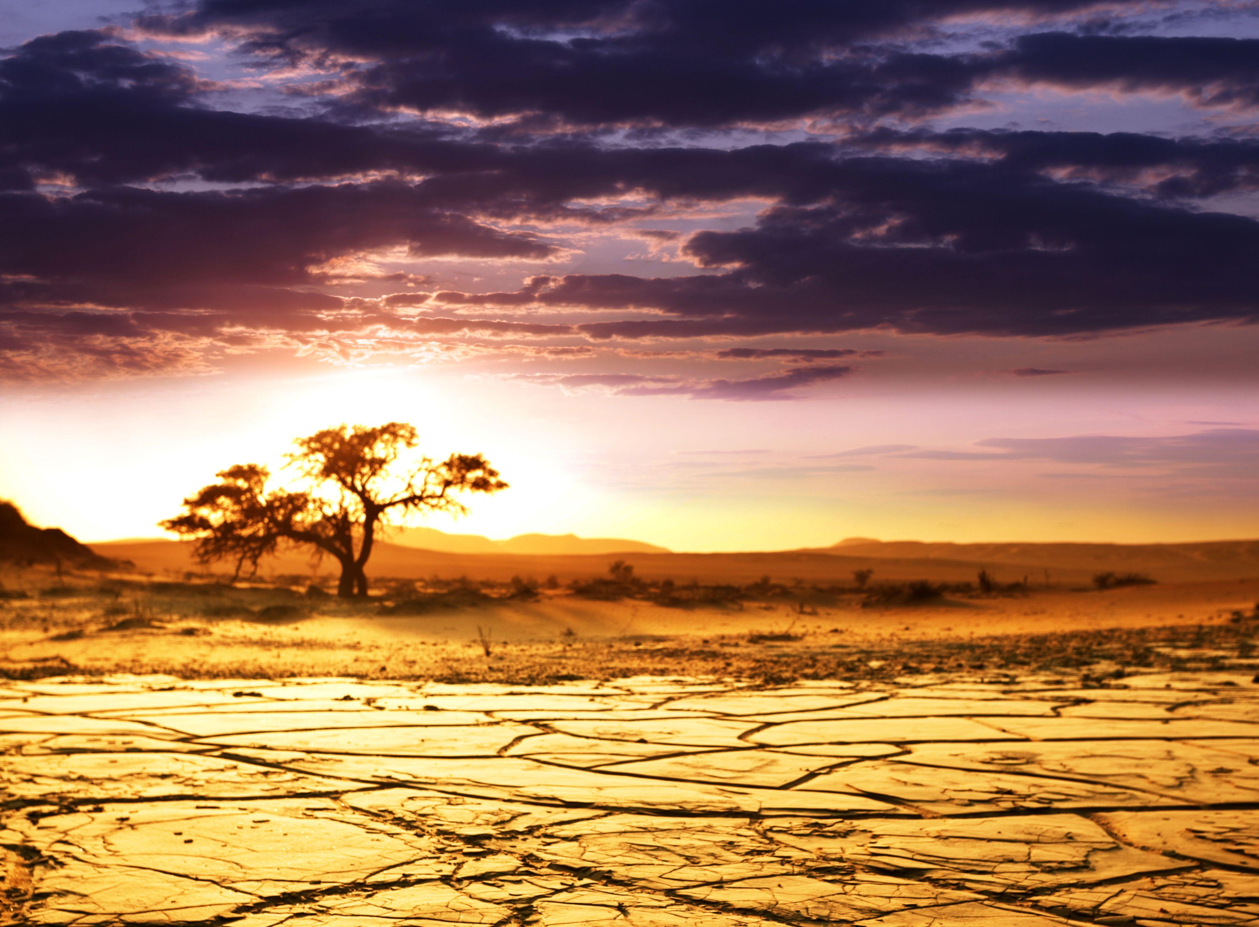 слободе данилова фотообои закат в африке продаже