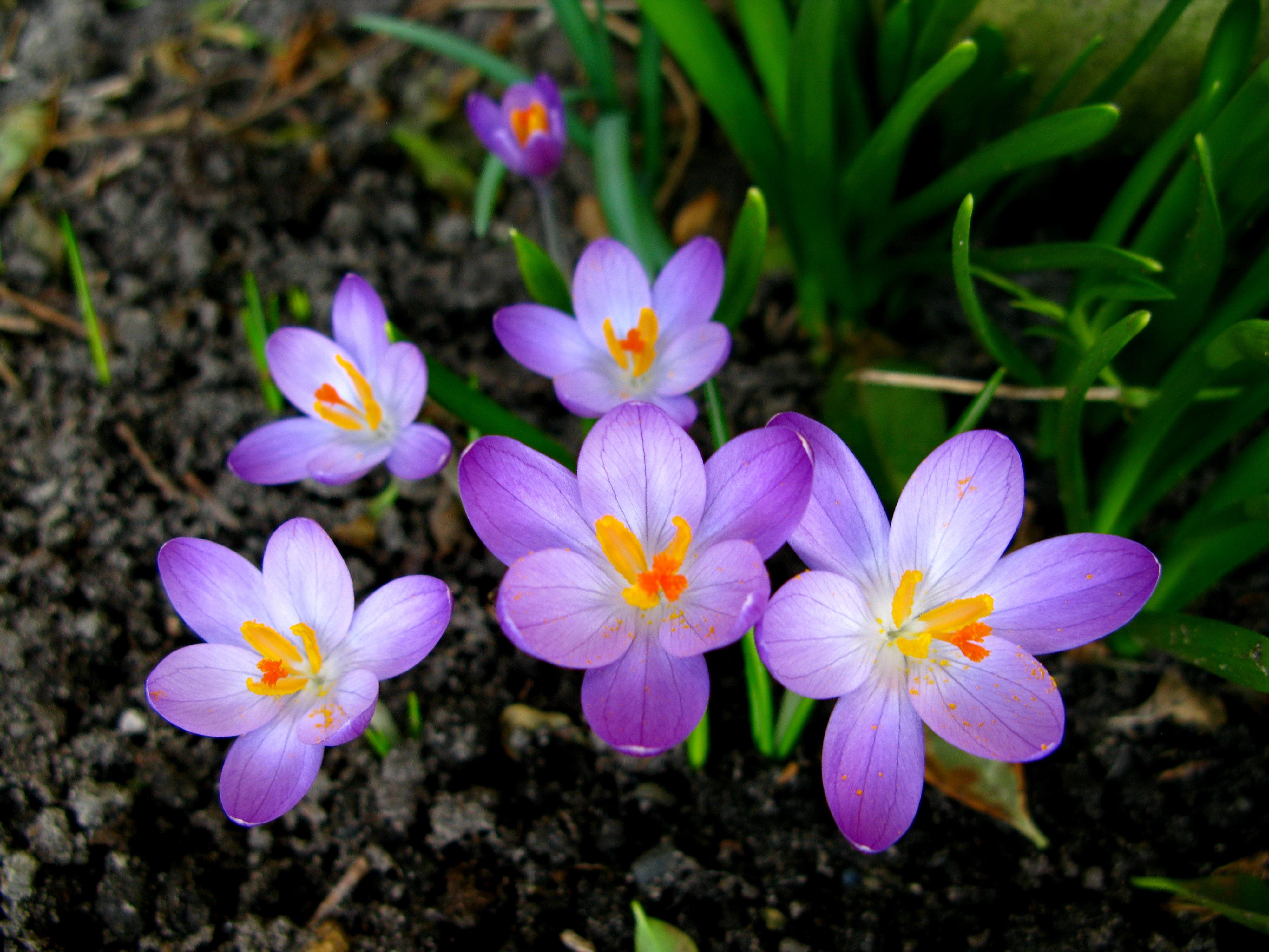 Цветочки весенние картинки ирисов всегда