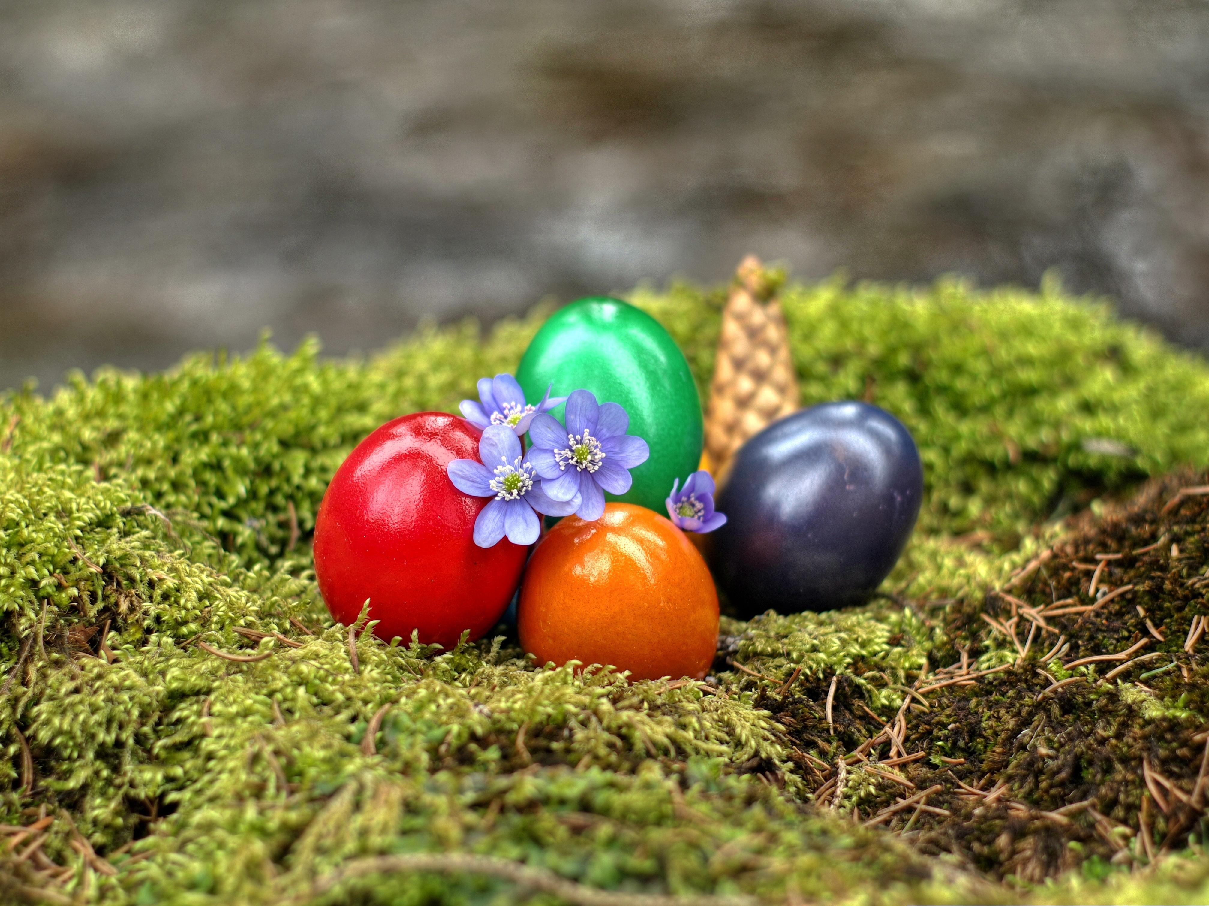 пасхальные яйца  № 1677969 без смс