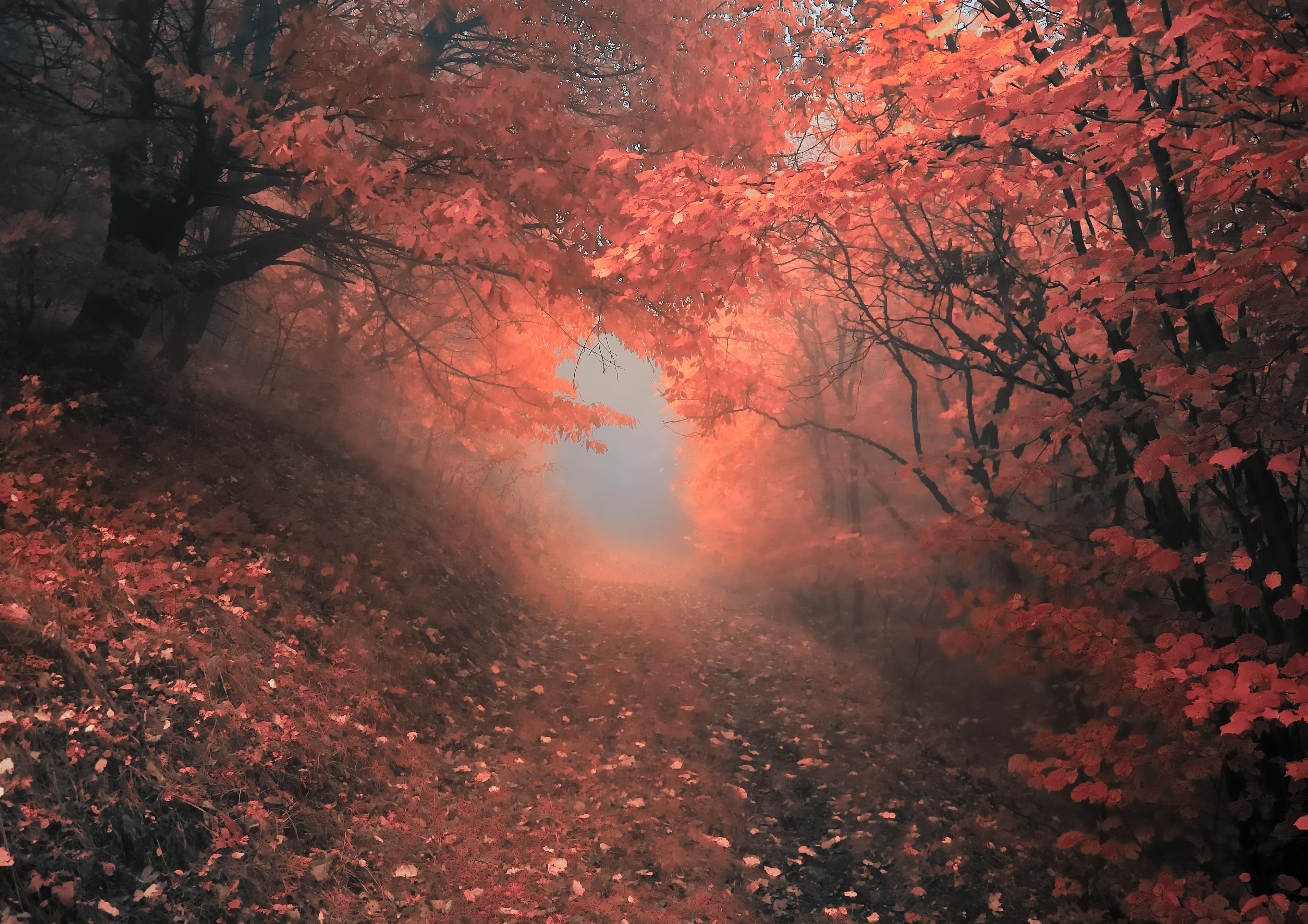 красные деревья  № 1276290  скачать