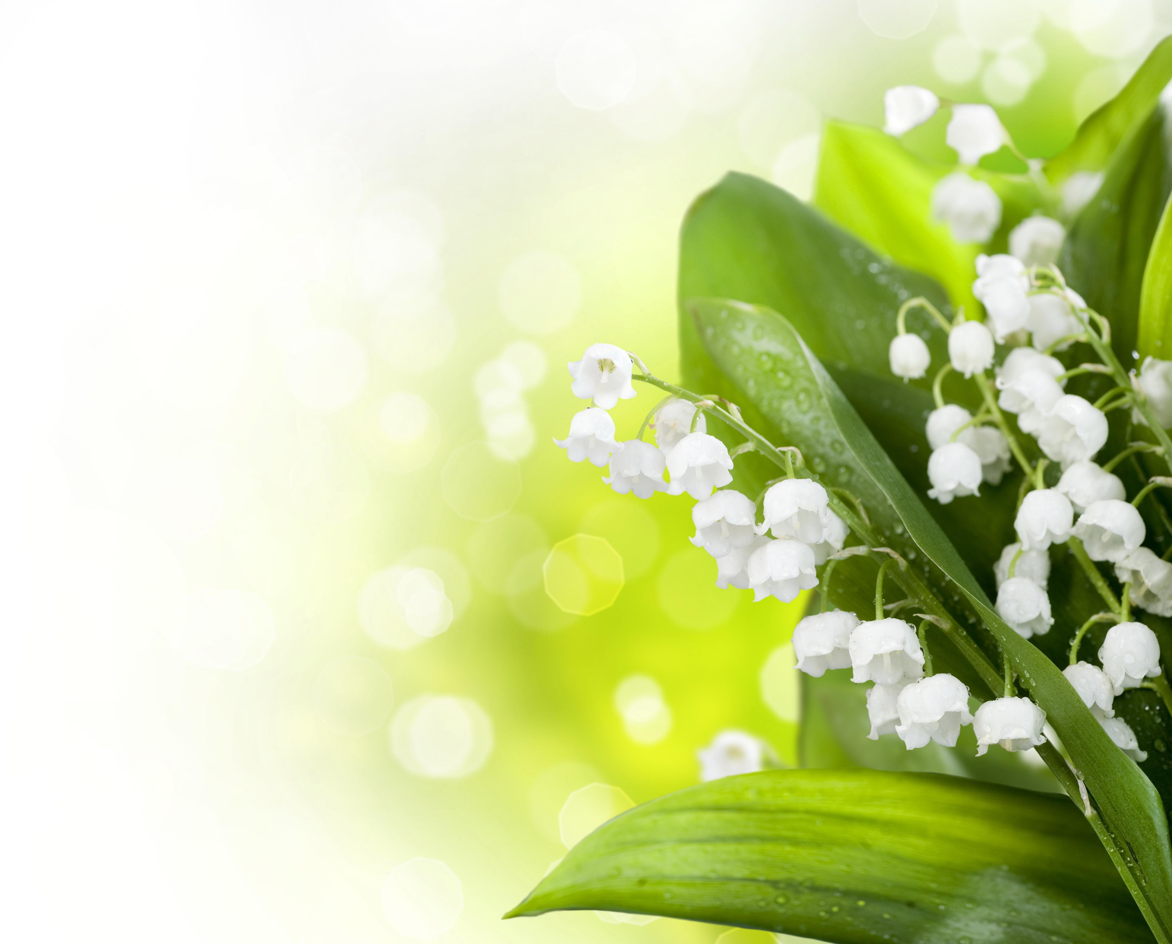 Красивые фоны для открыток весна, днем рождения