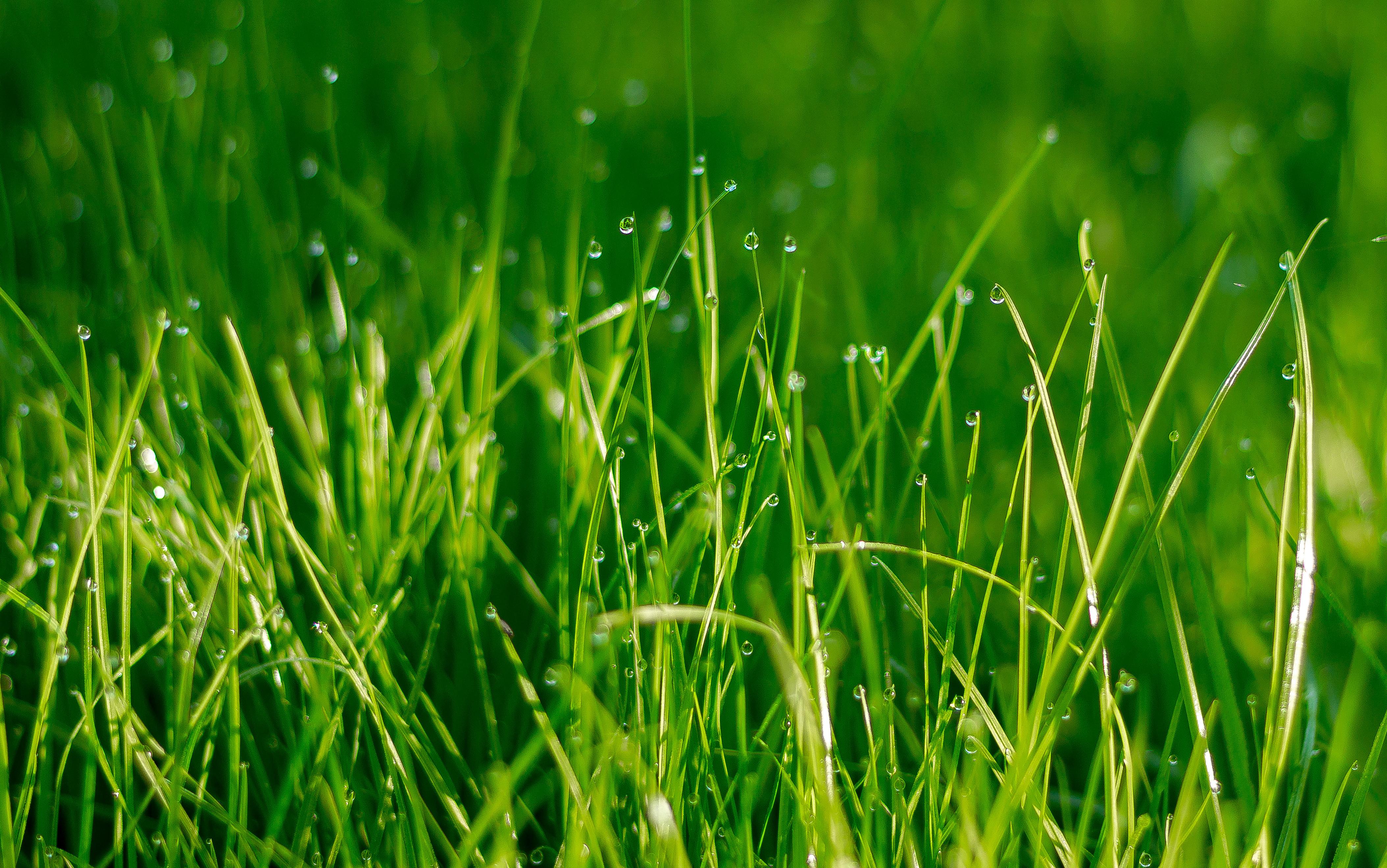 Зеленая, летняя трава  № 1074212 без смс