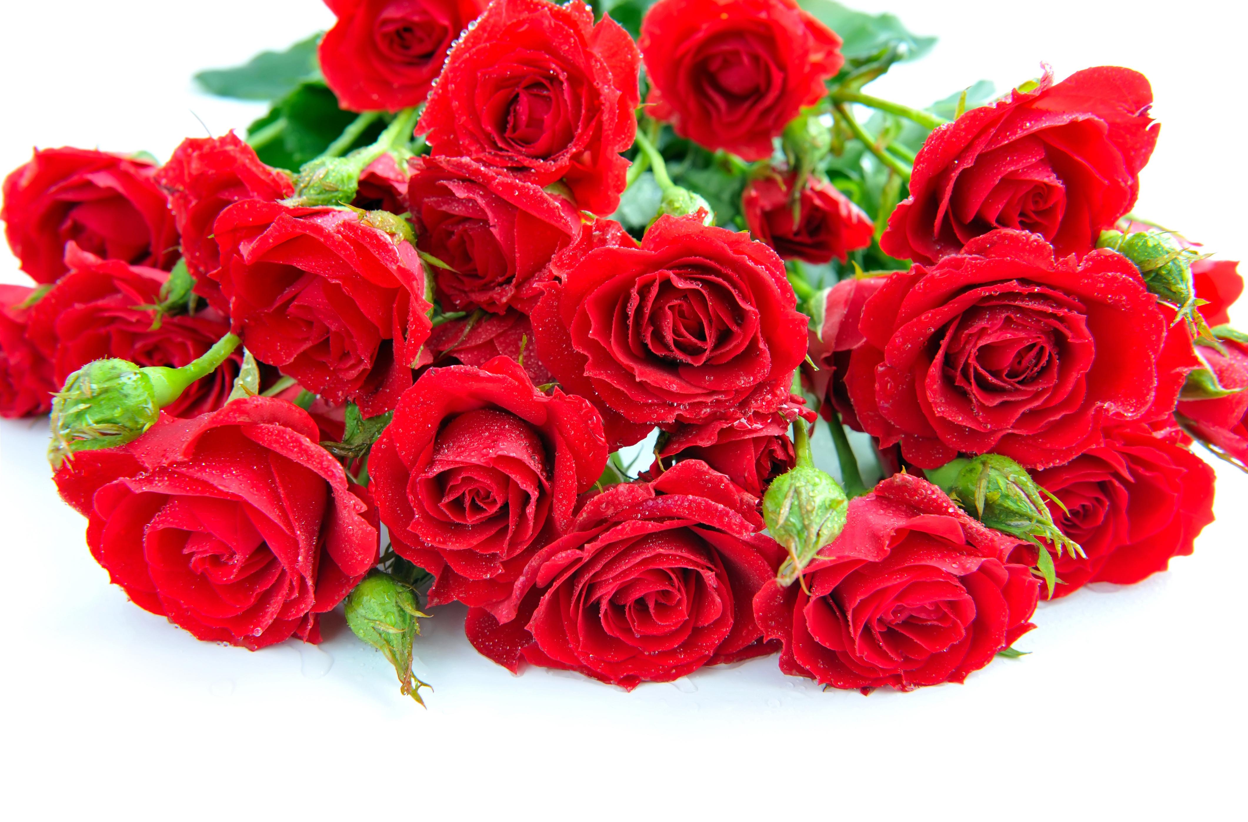 Красивые открытки для девушек цветы с надписью