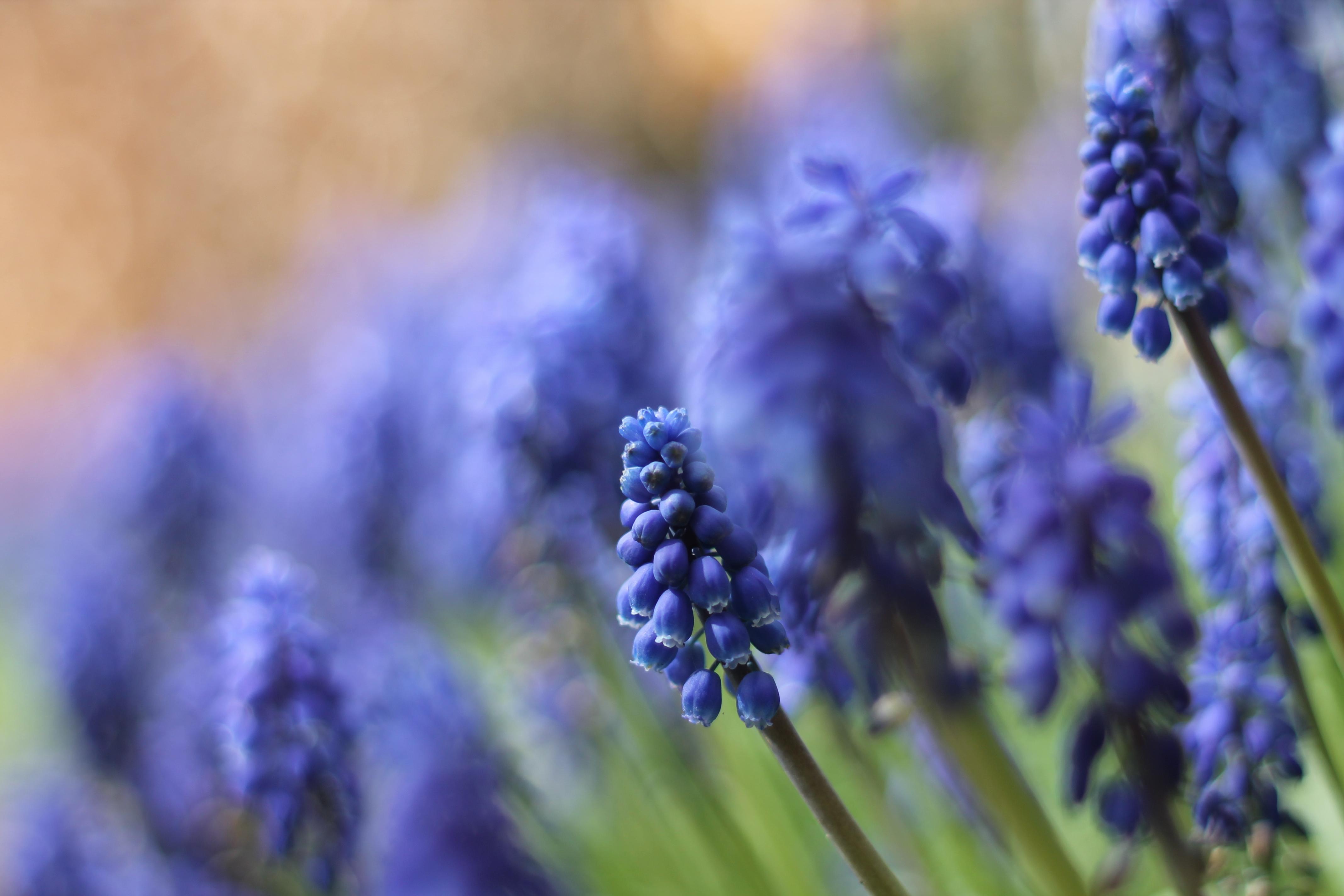 природа синие цветы nature blue flowers  № 1376466 загрузить