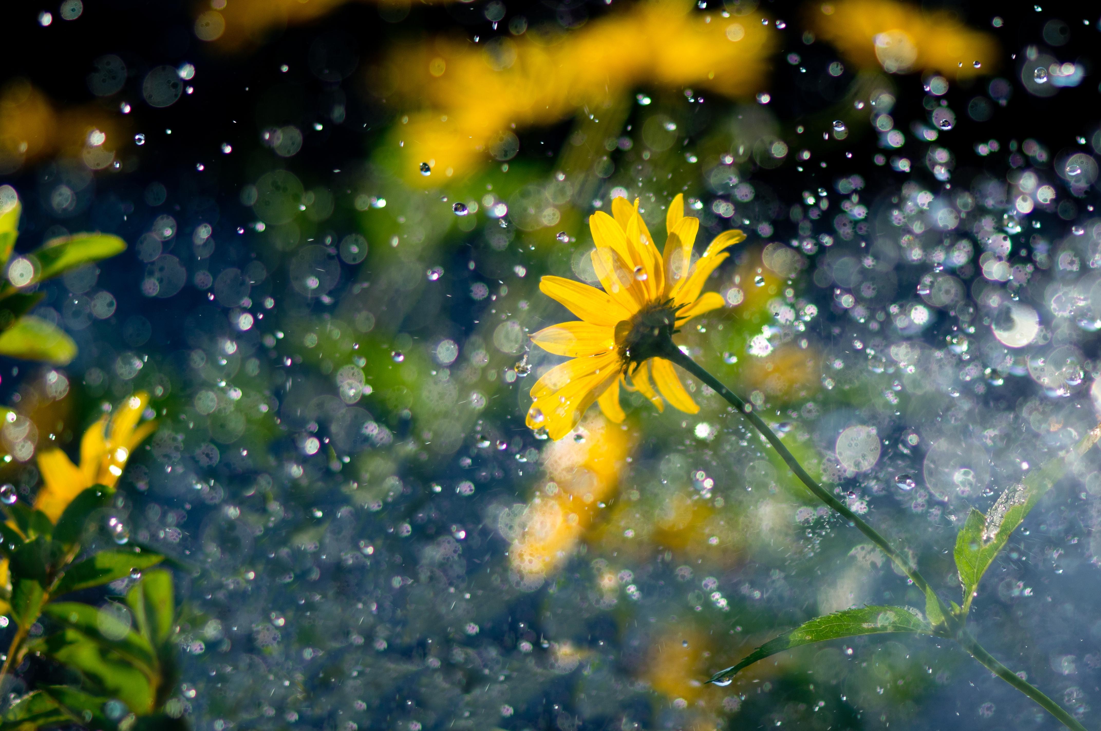 Обои на телефон лето цветы под дождем