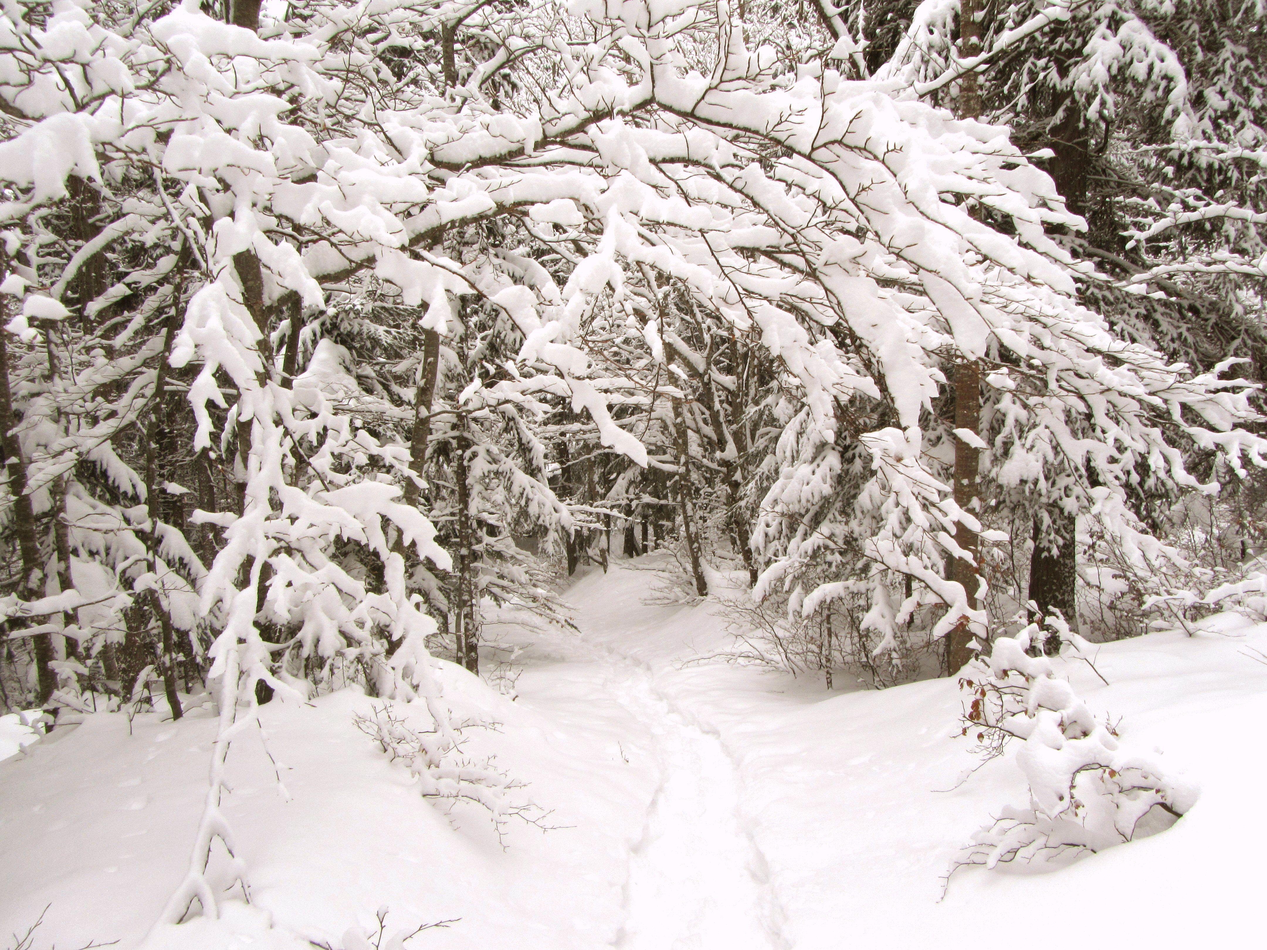 Тропинка в зимнем лесу картинки