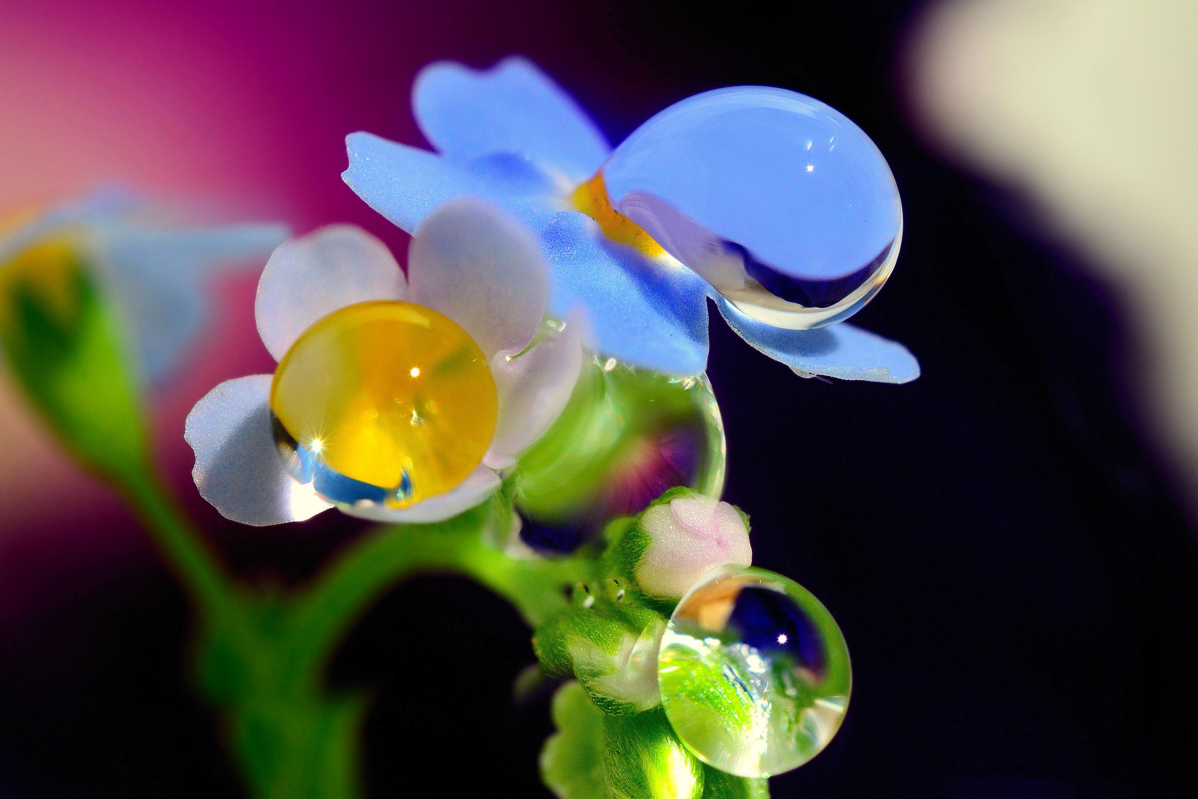 Днем, открытки роса на цветах
