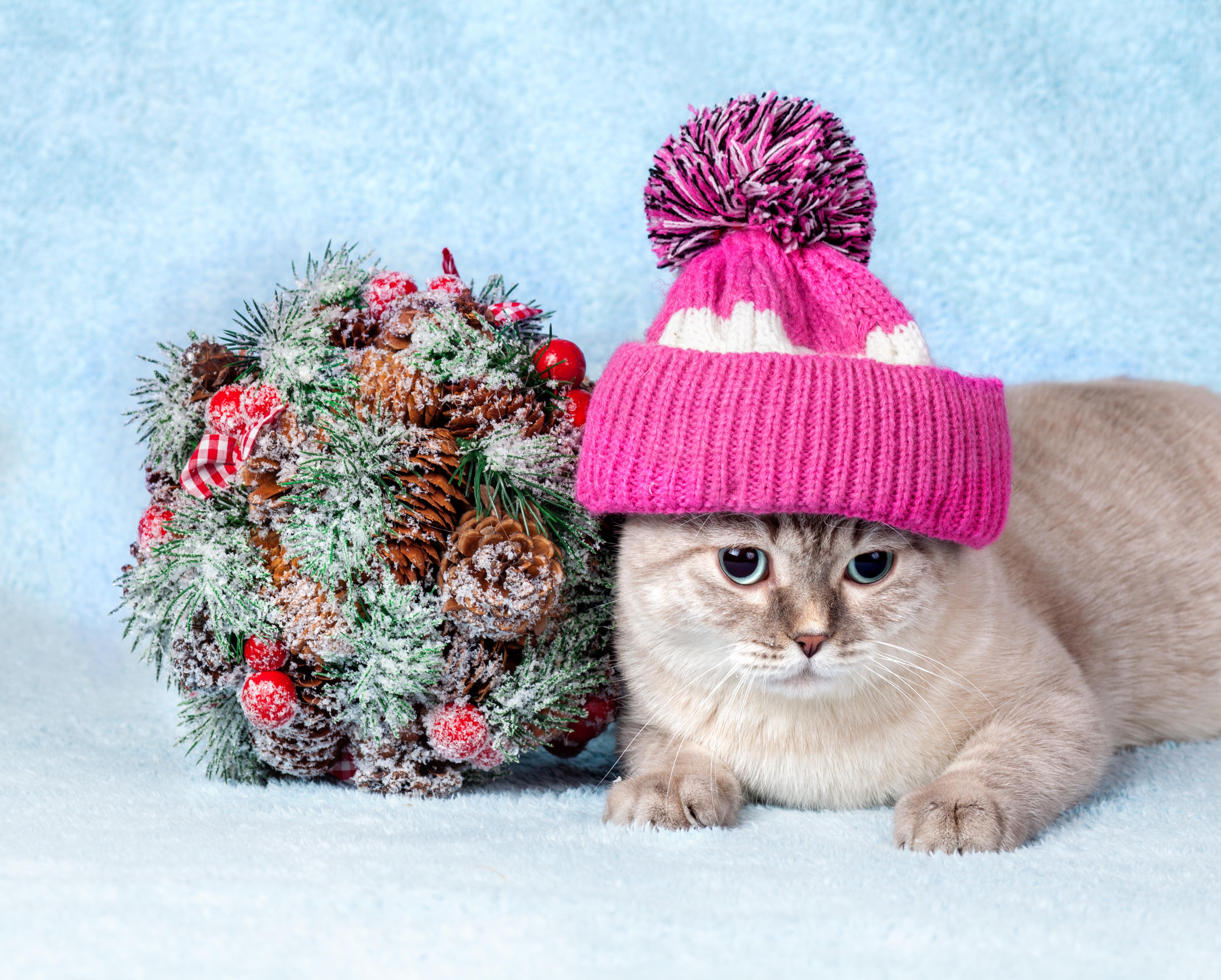 Кот под шапкой  № 3059219 без смс