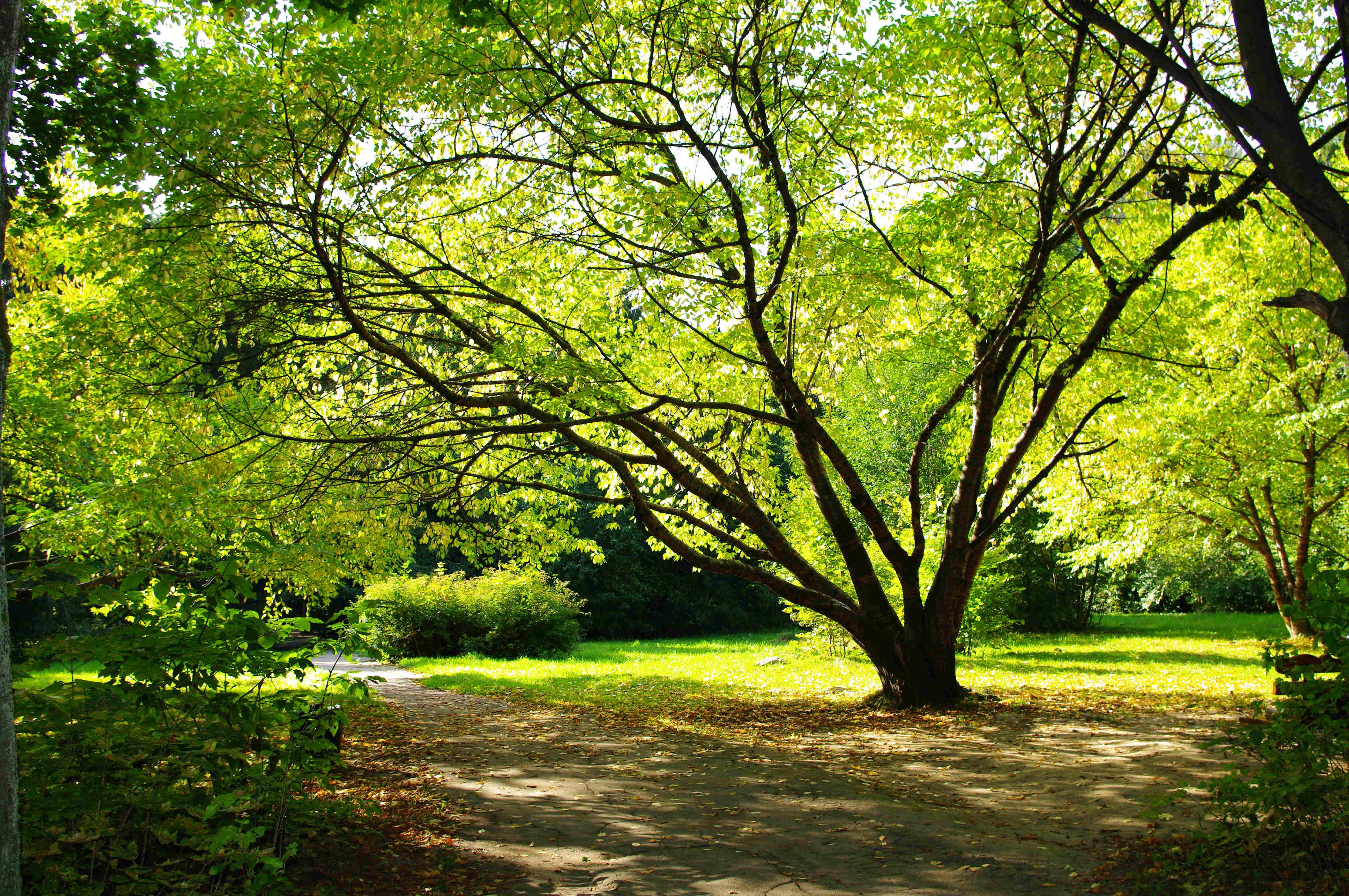 дерево листья парк  № 438522  скачать
