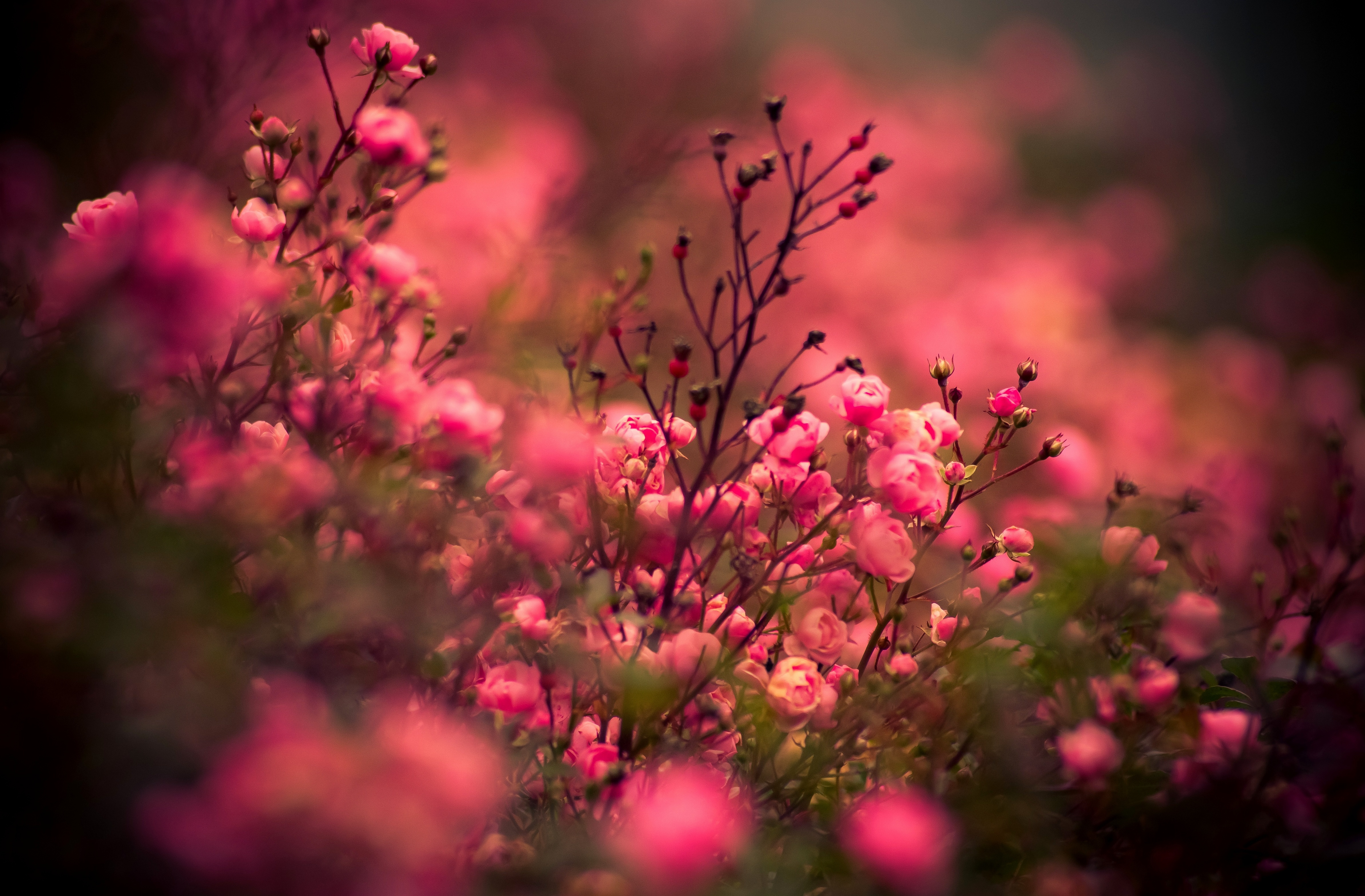 цветы картинки фото: