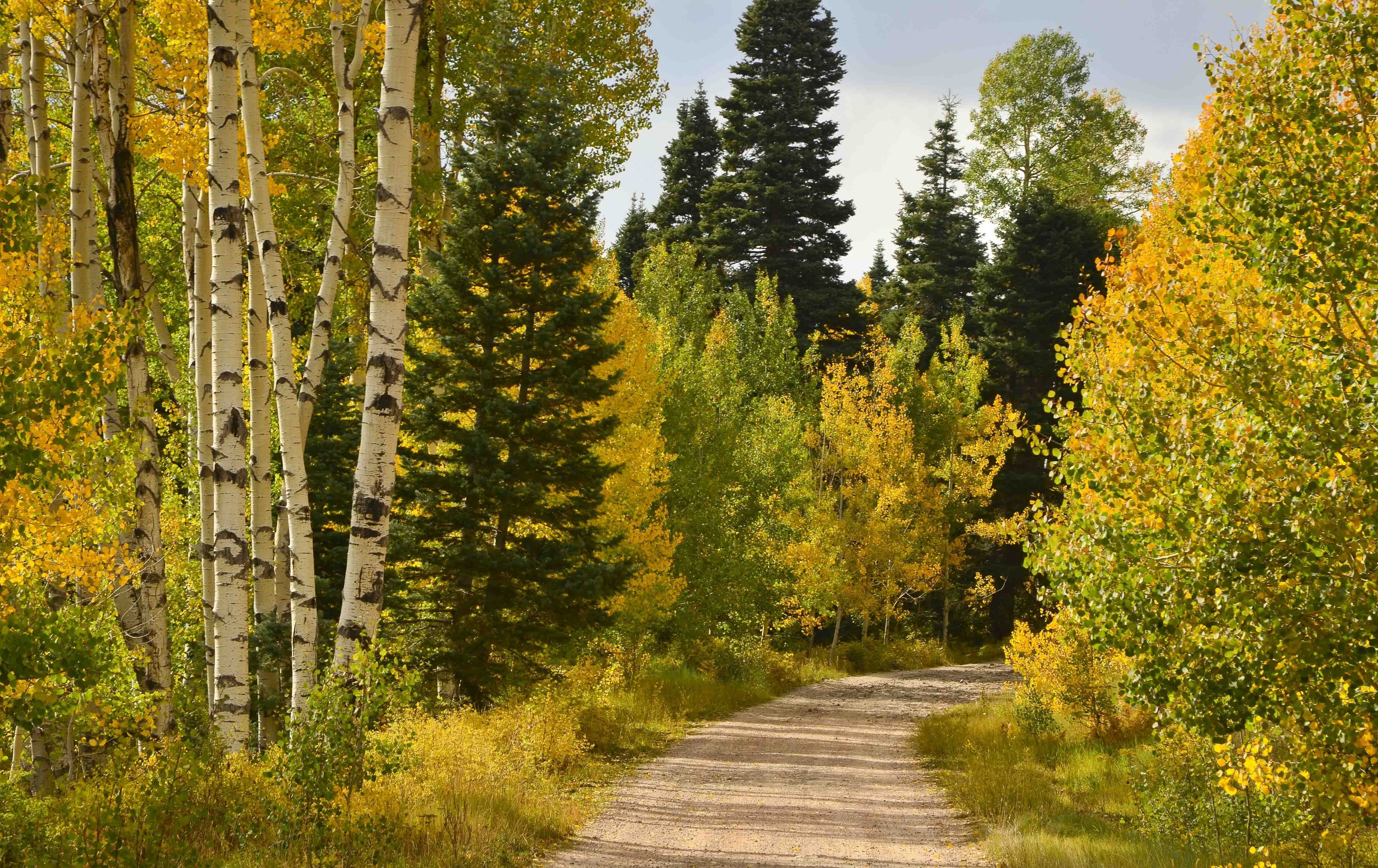 Картинки ранняя осень сентябрь, пожеланием