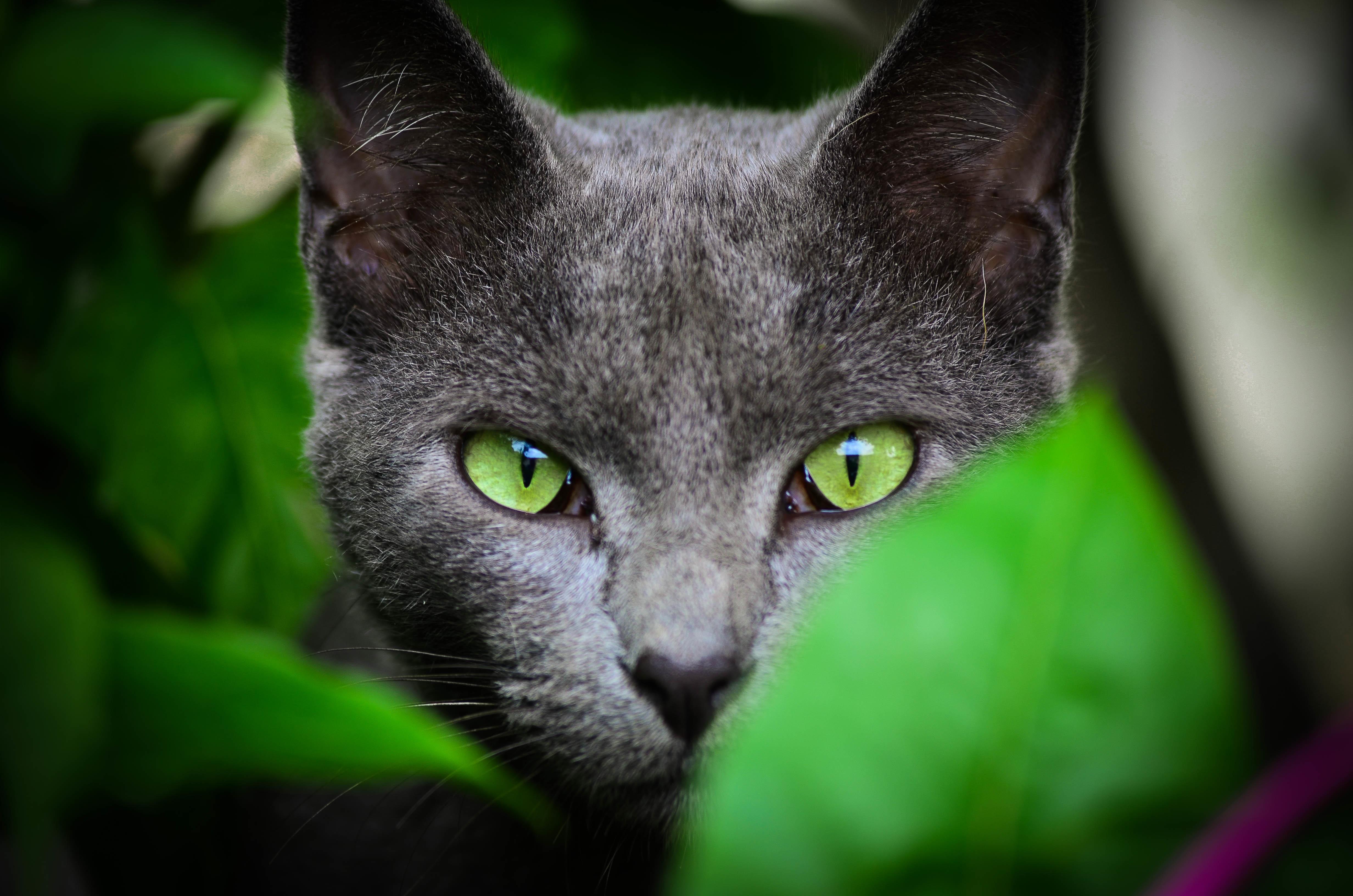 кошка зеленые глаза постель  № 3655489  скачать