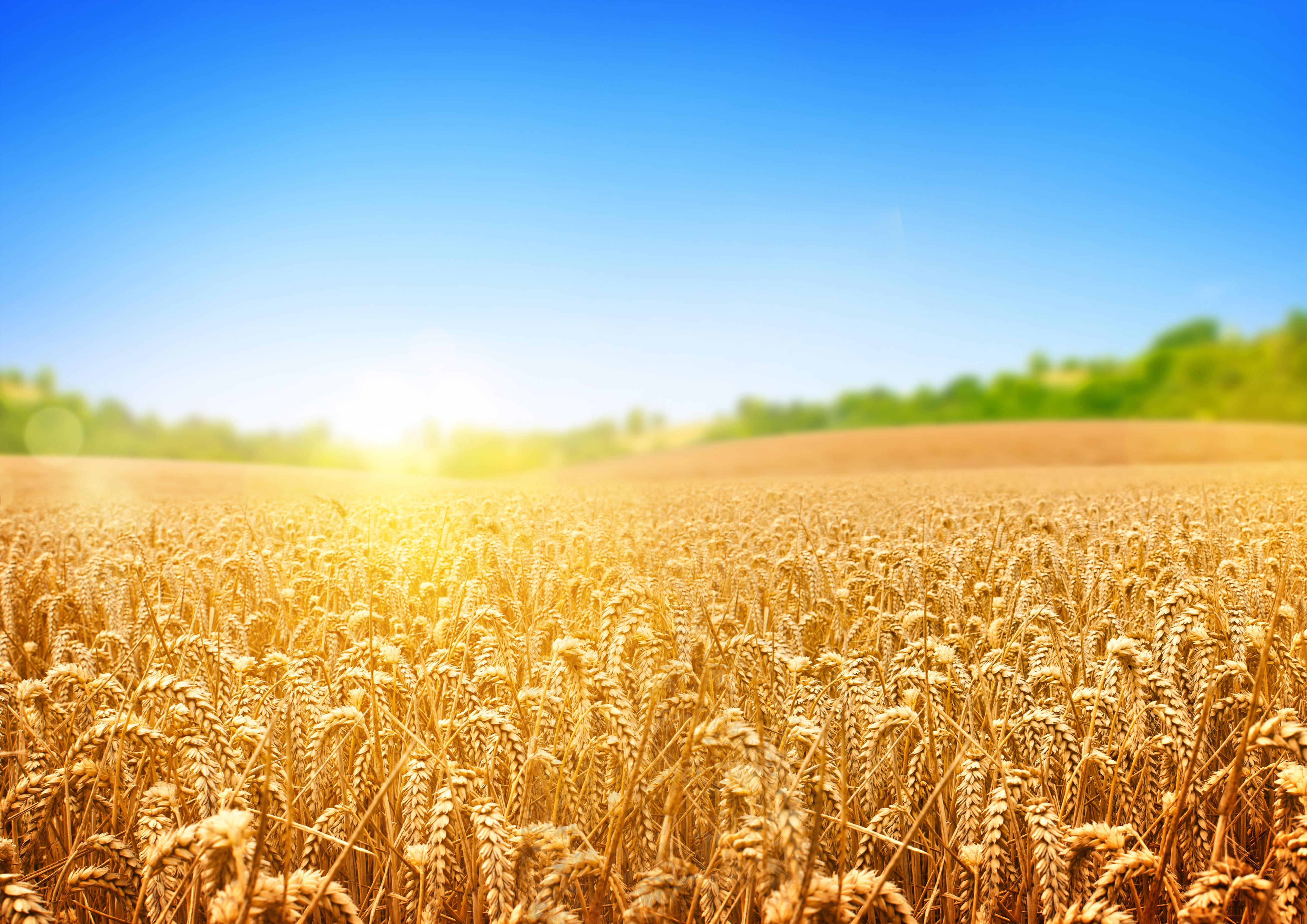 Рішенням LIV сесії районної ради VI скликання затверджено Програму формування урожаю сільськогосподарських культур 2015 року