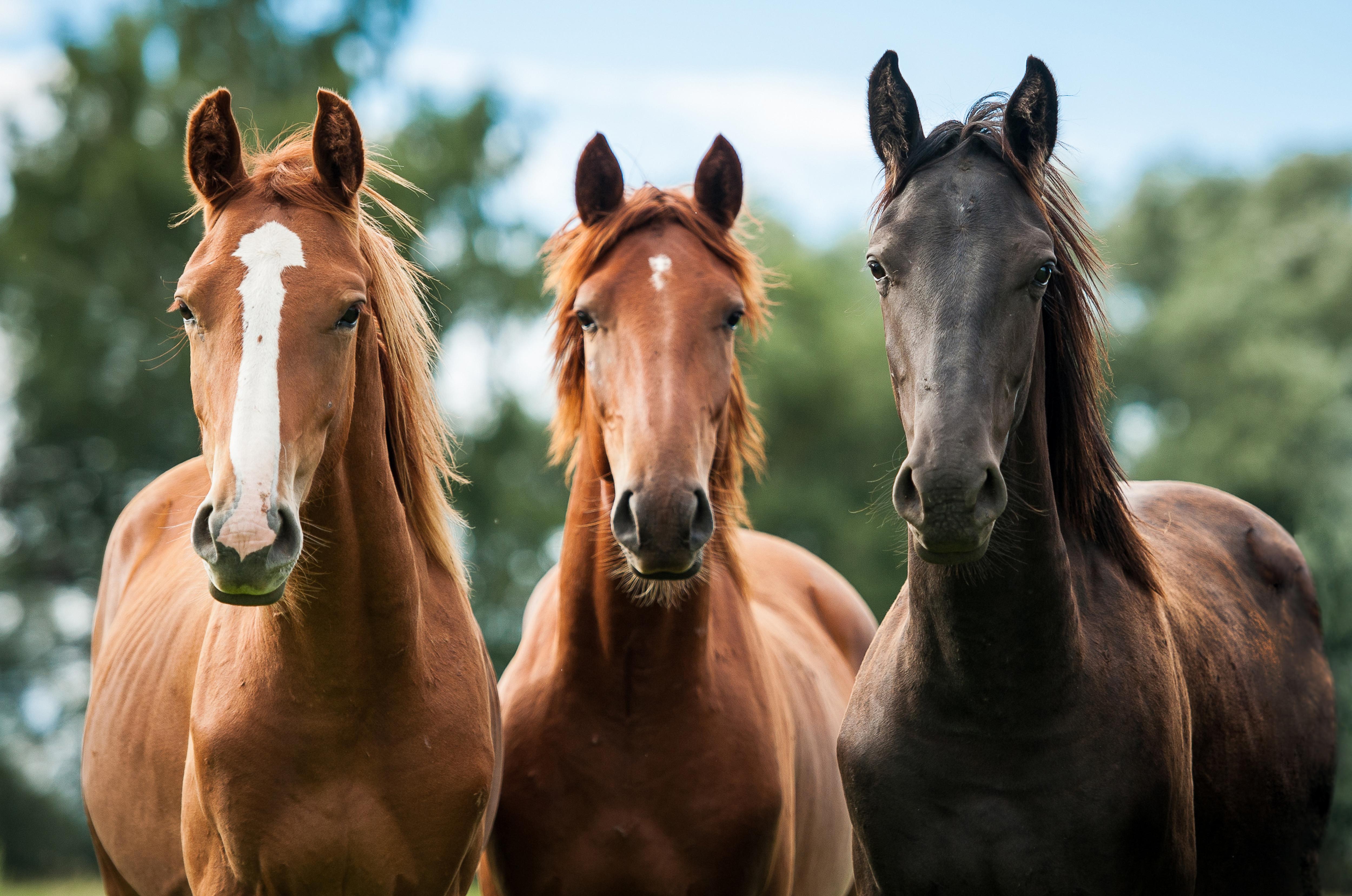 Старый и молодой кони 17 фотография