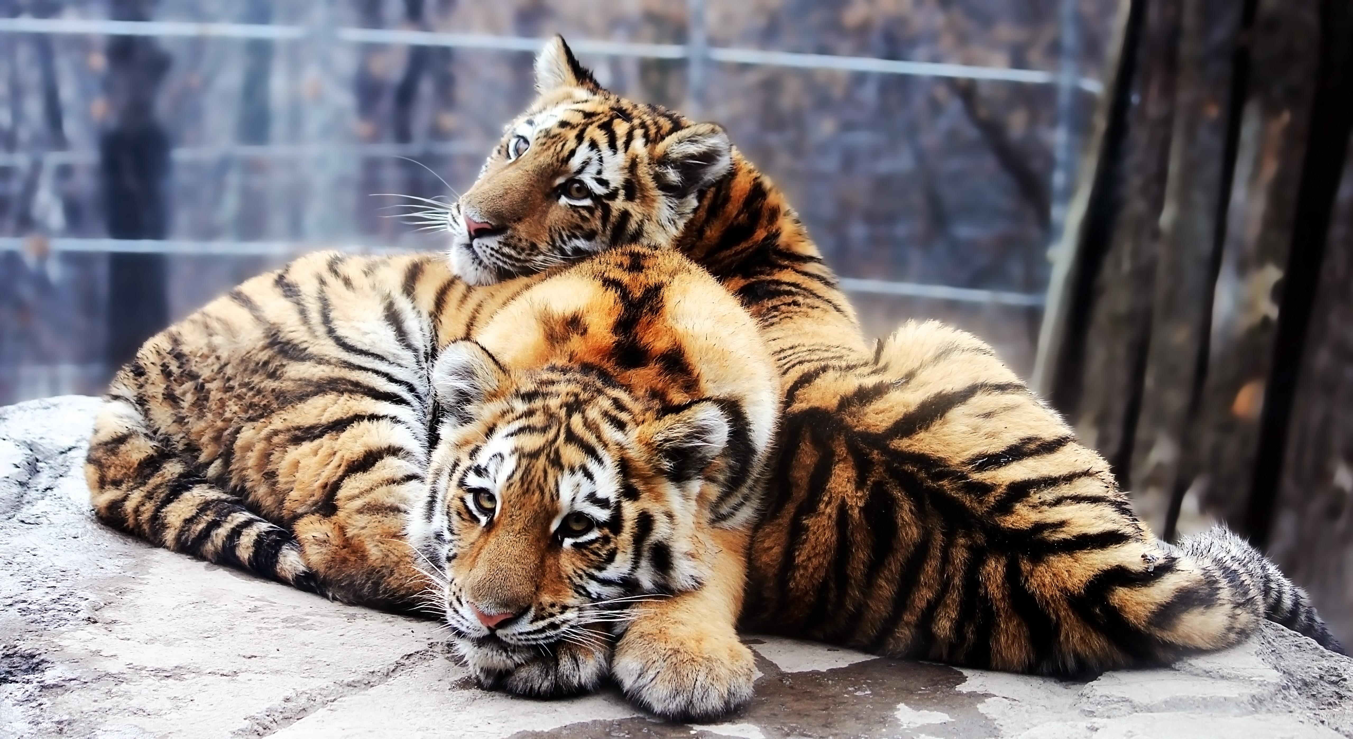 Скачать Обои Животные
