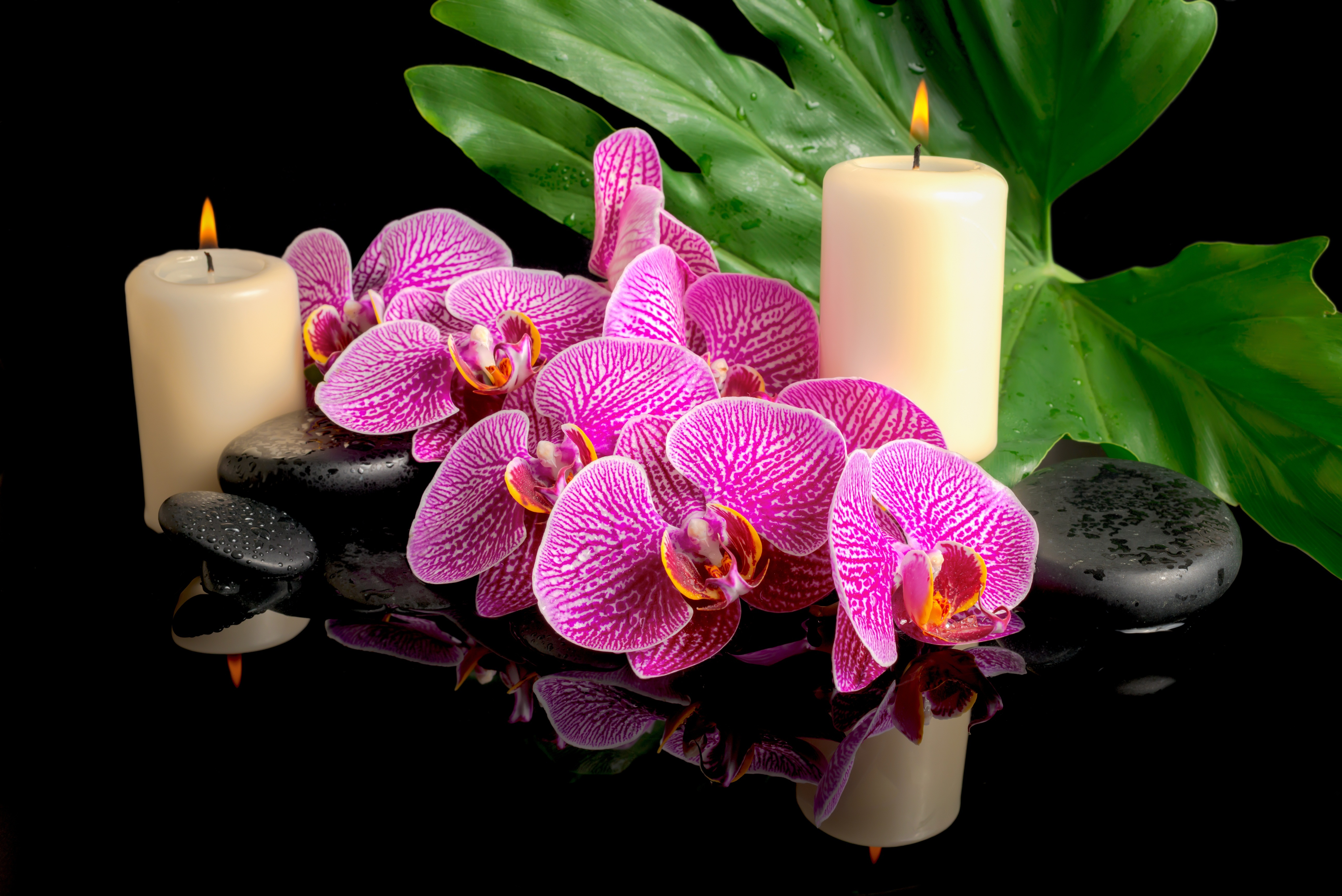шикарные орхидеи в картинках зеленые, часто