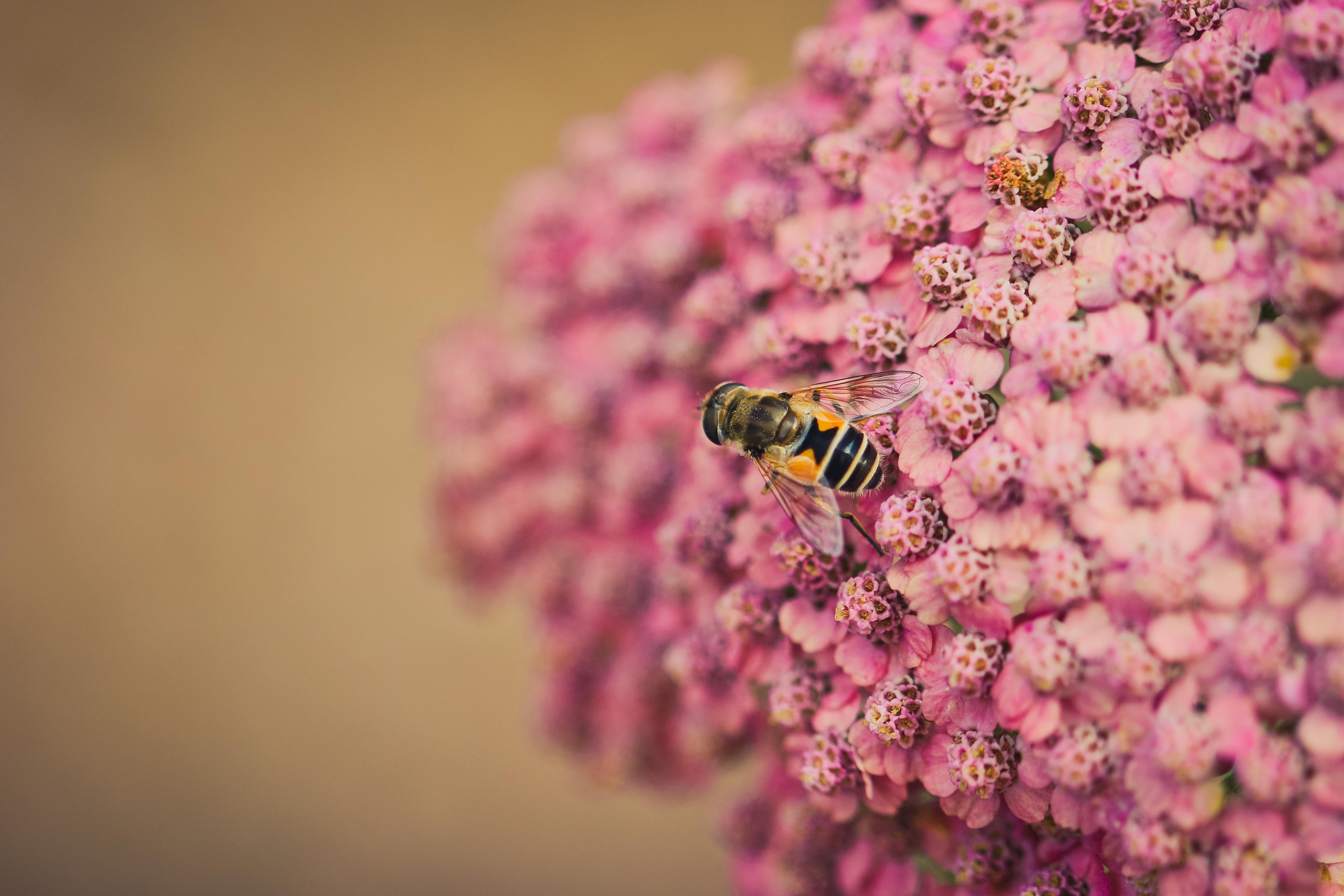 пчела цветы розовые flowers pink bee  № 910727 бесплатно