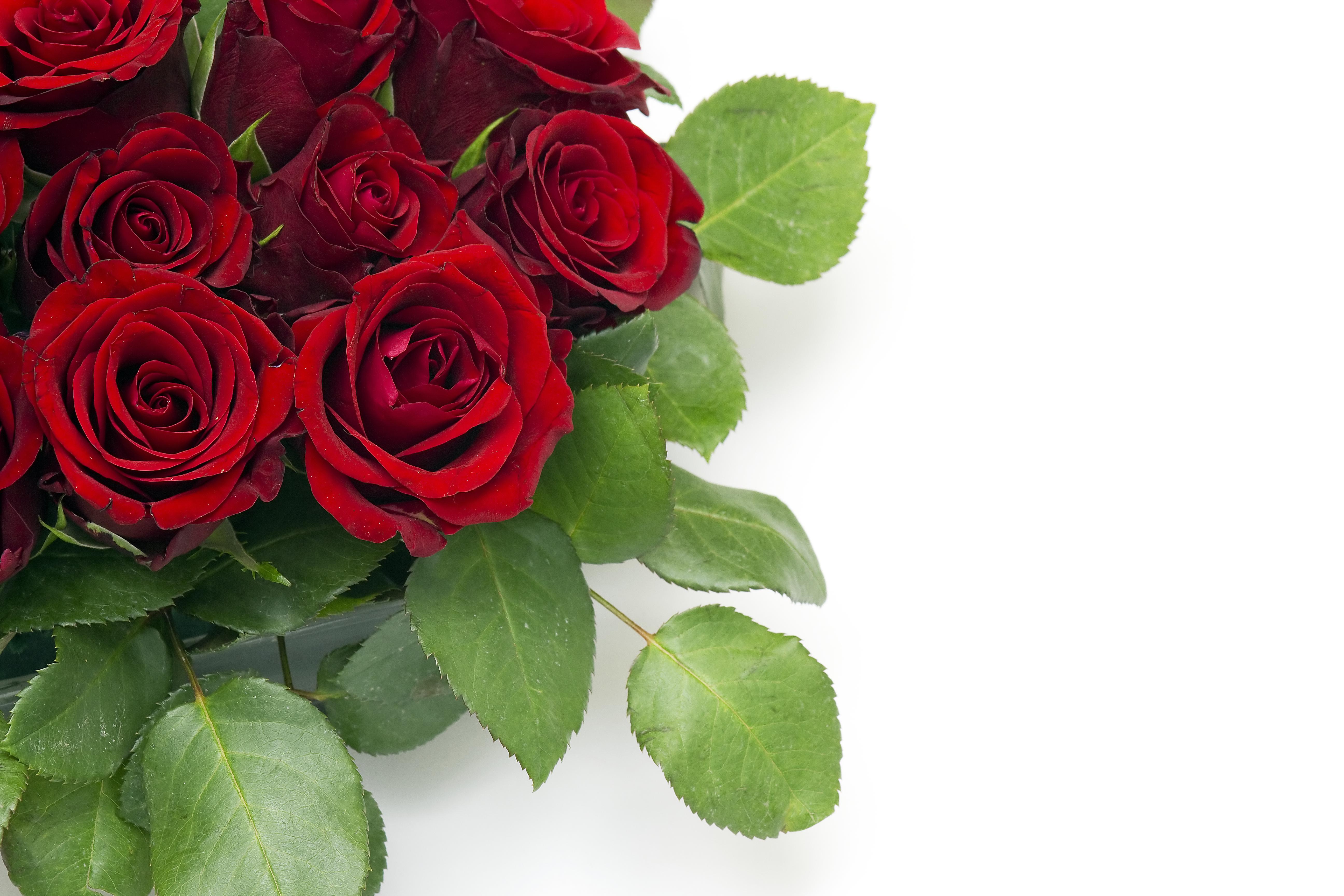 каждой цветы для поздравления сотрудникам люди, рекламу которых