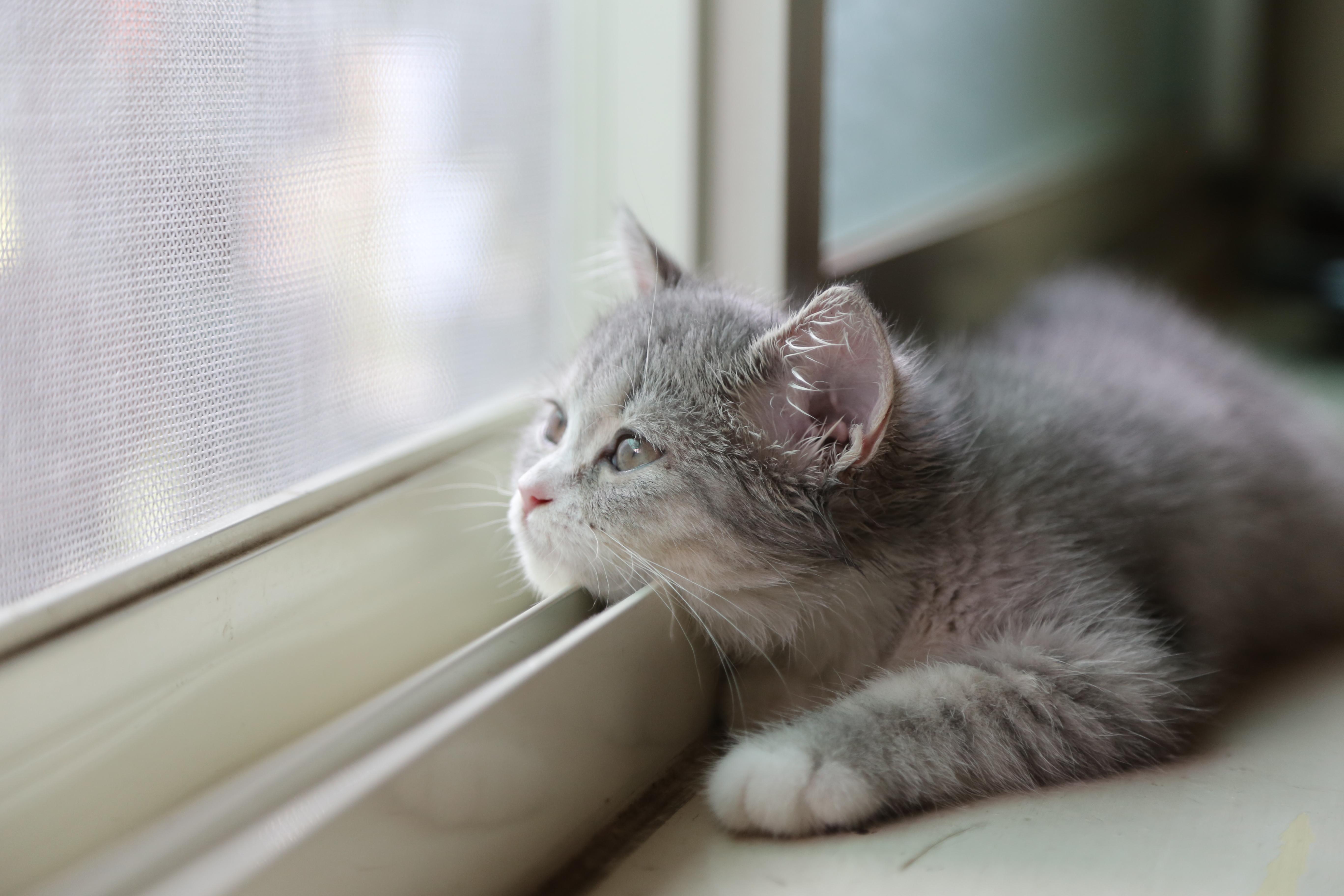 котята на окне kittens on the window  № 3063190 бесплатно