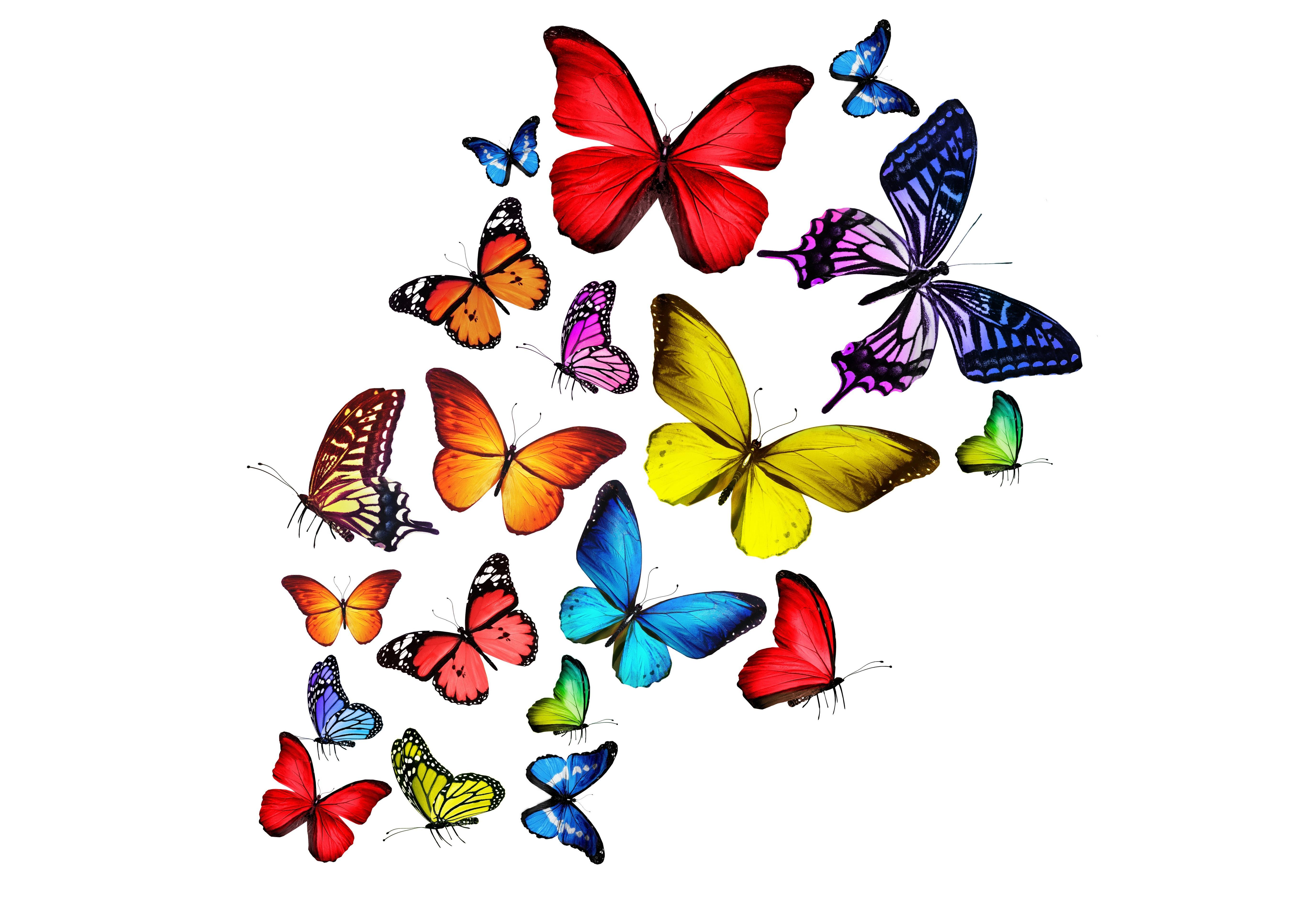 Большие картинки для детей нарисованные цветные красивые