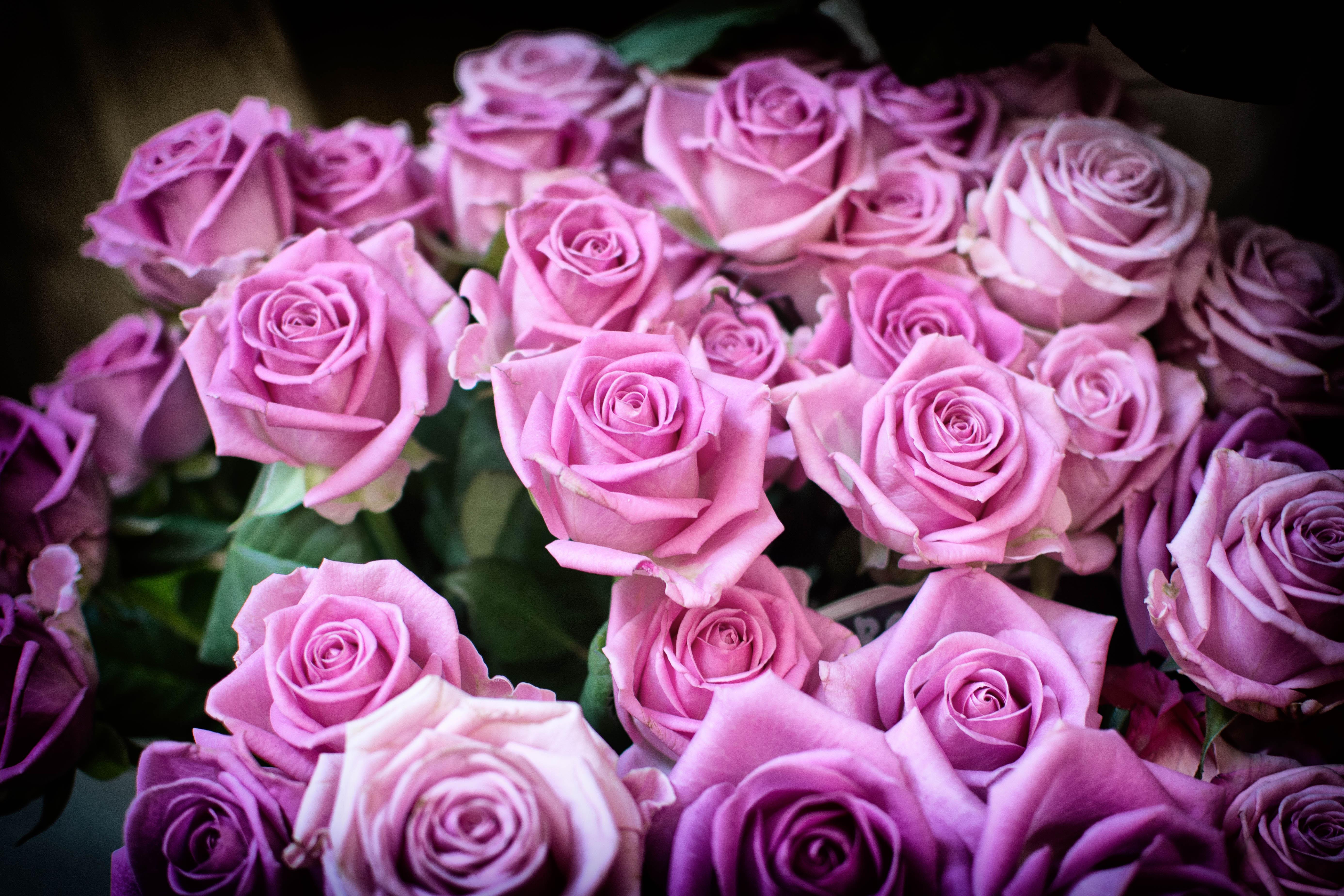 сообщил, картинки роз в высоком разрешении тухью