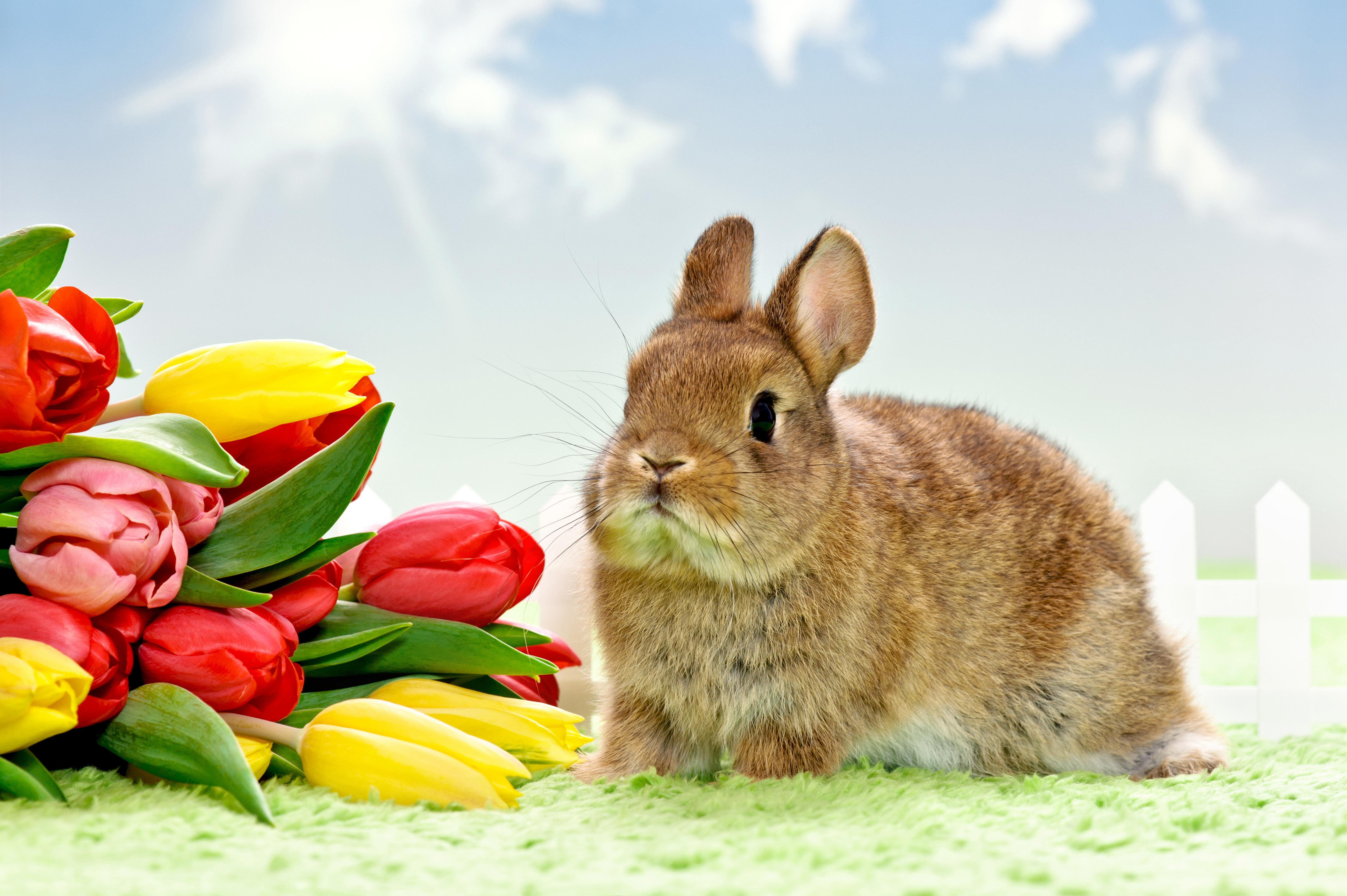 природа кролик цветы тюльпаны яйца пасха  № 271710  скачать